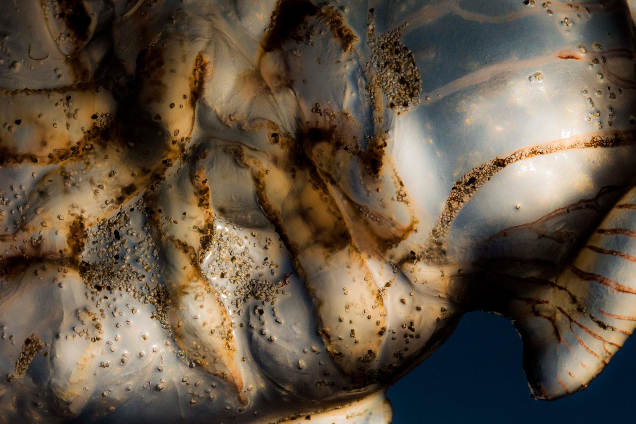 Jellyfish by Rapsbollen