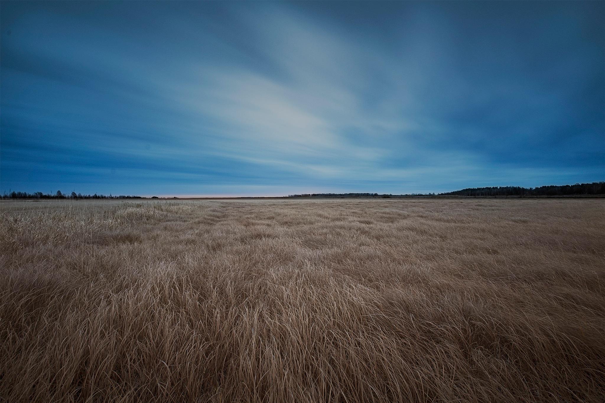 Shore meadow  by Lena Schöld