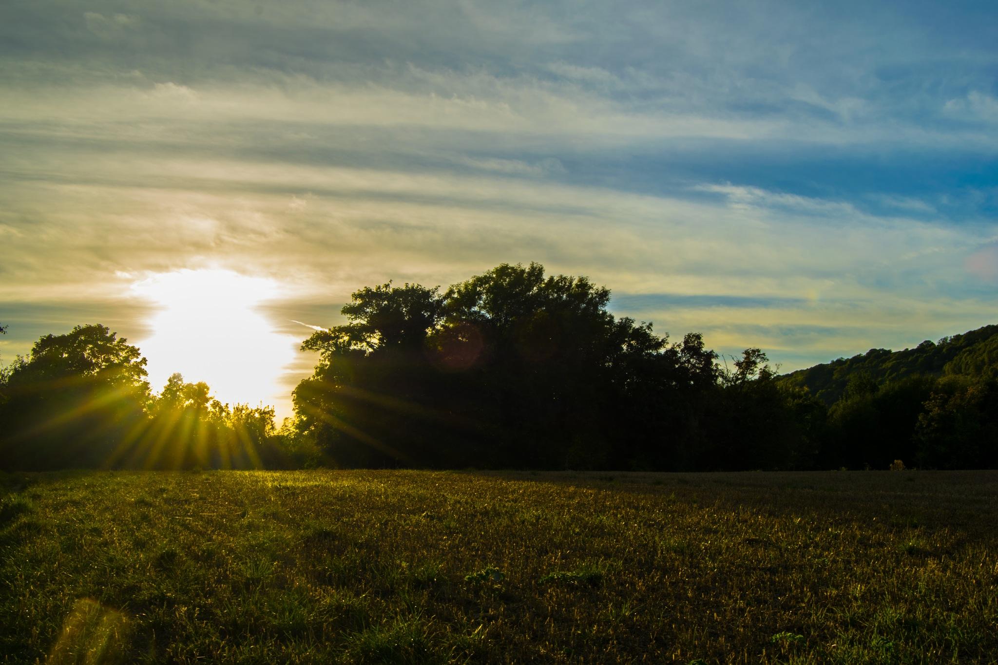 Fields by Sunset by Reece Johnson