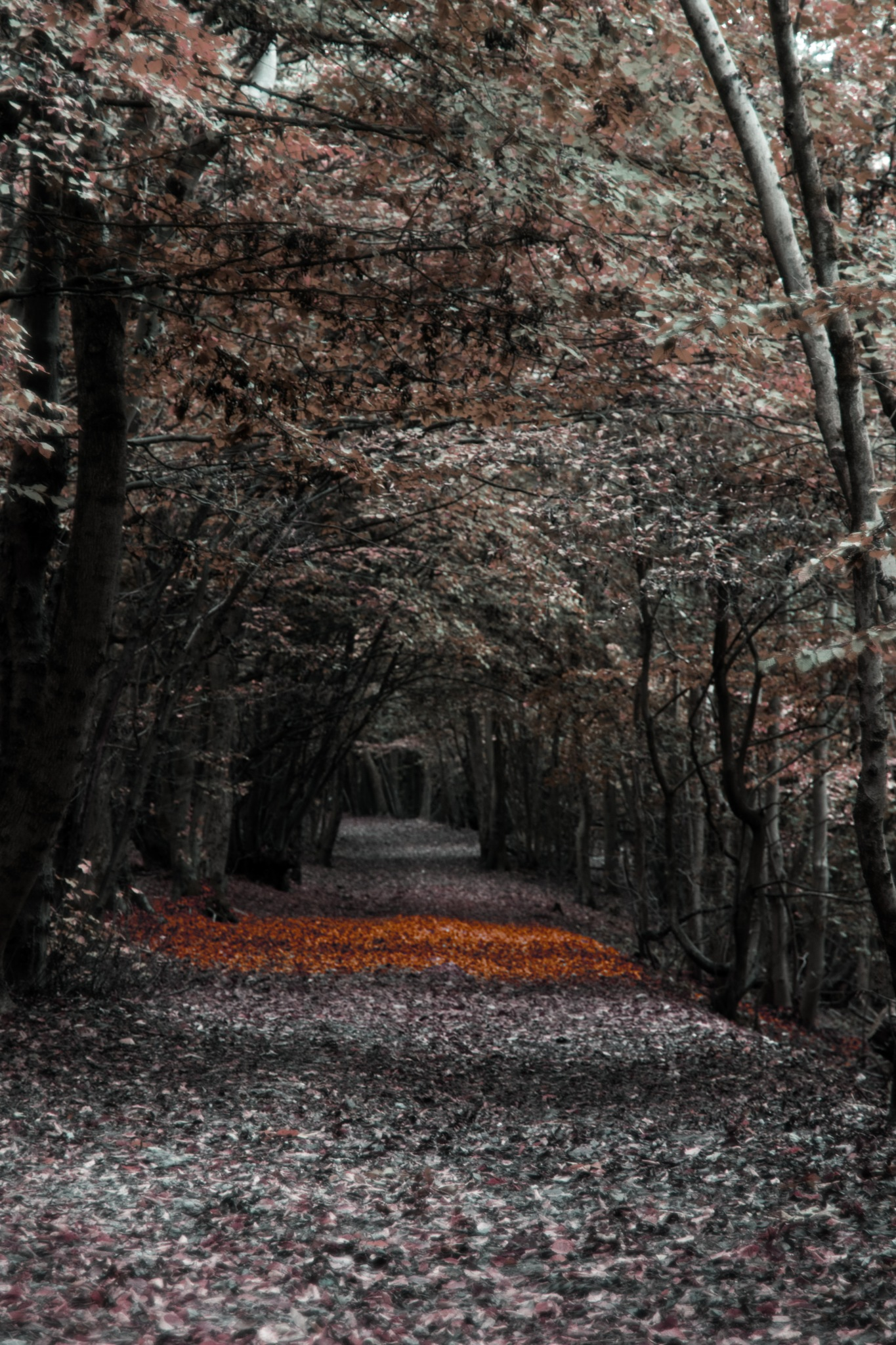 The Path to Autumn by Reece Johnson