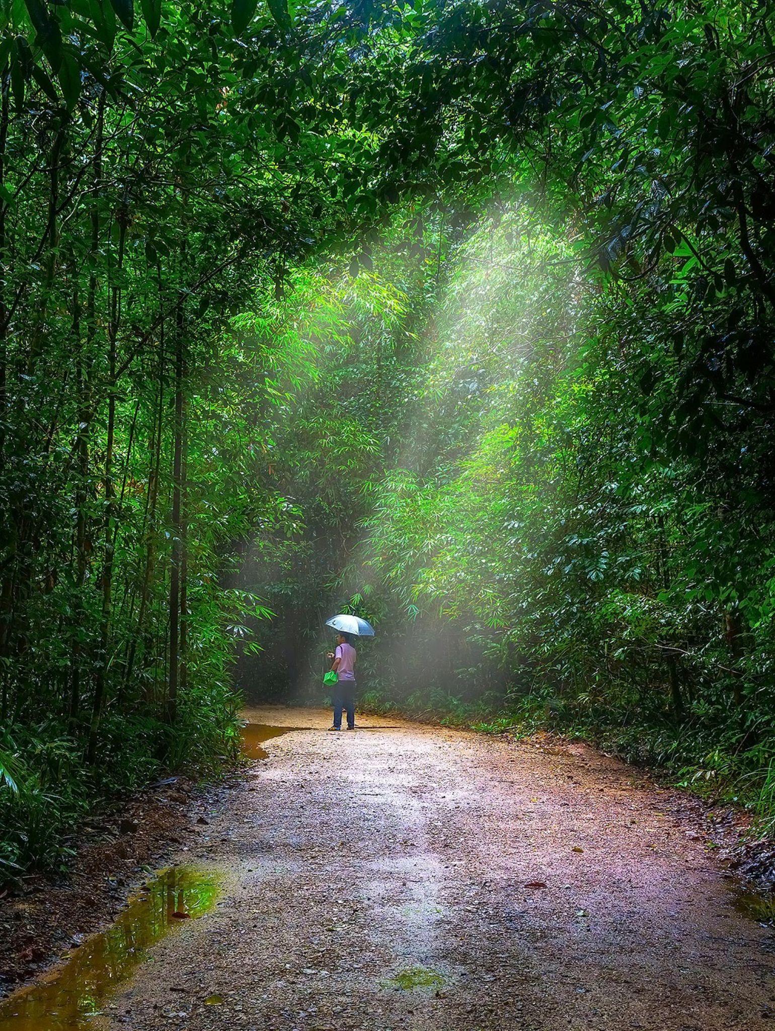 Rain and Light by ichoo2000