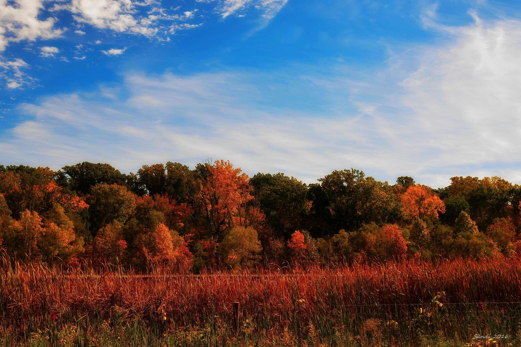 Autumn Color In Michigan by tiggs