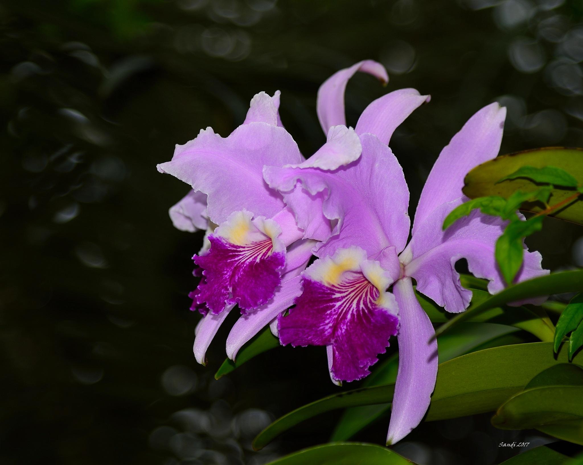 Botanical Garden Lovely by tiggs
