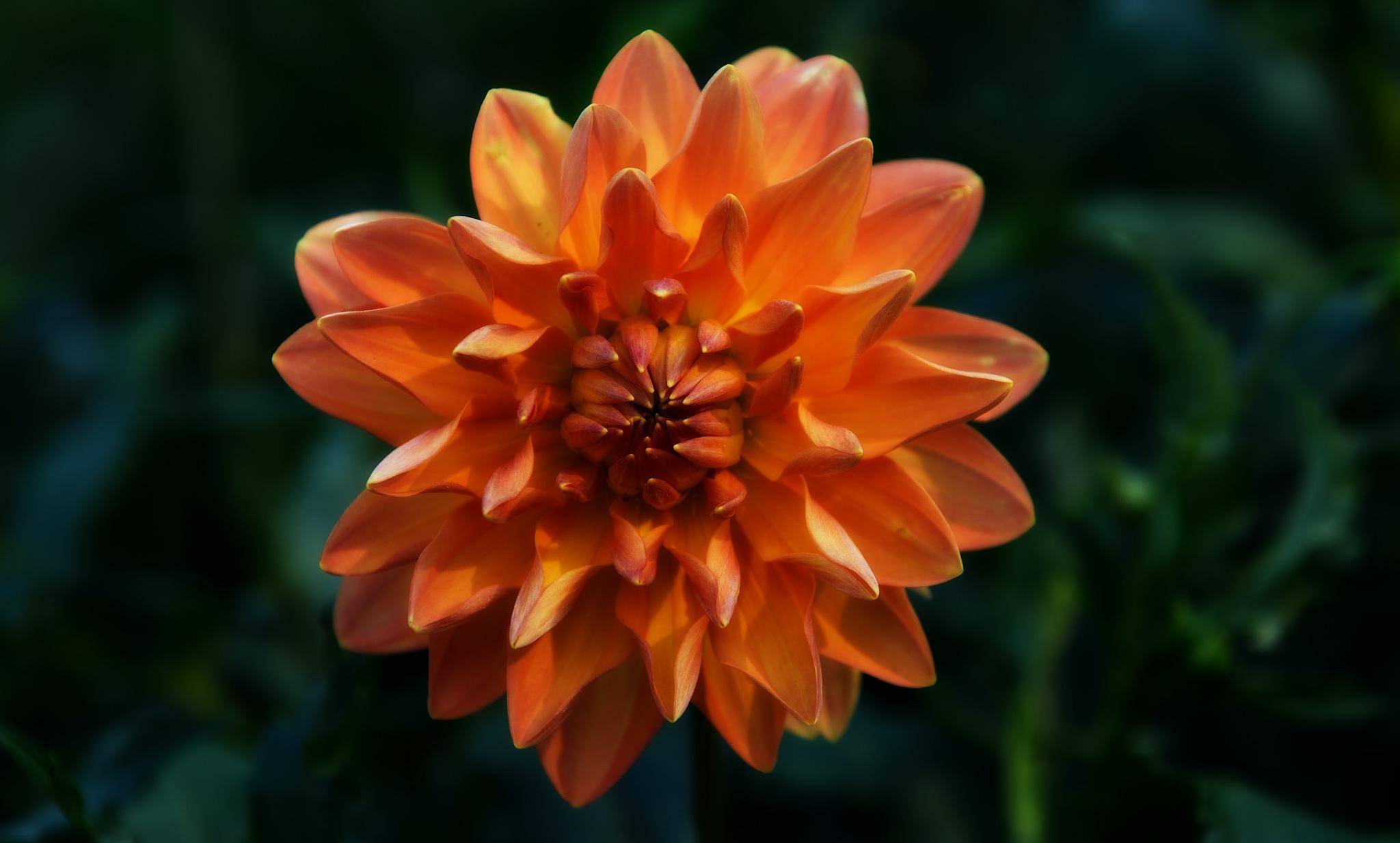 Bloom'n D. by tiggs