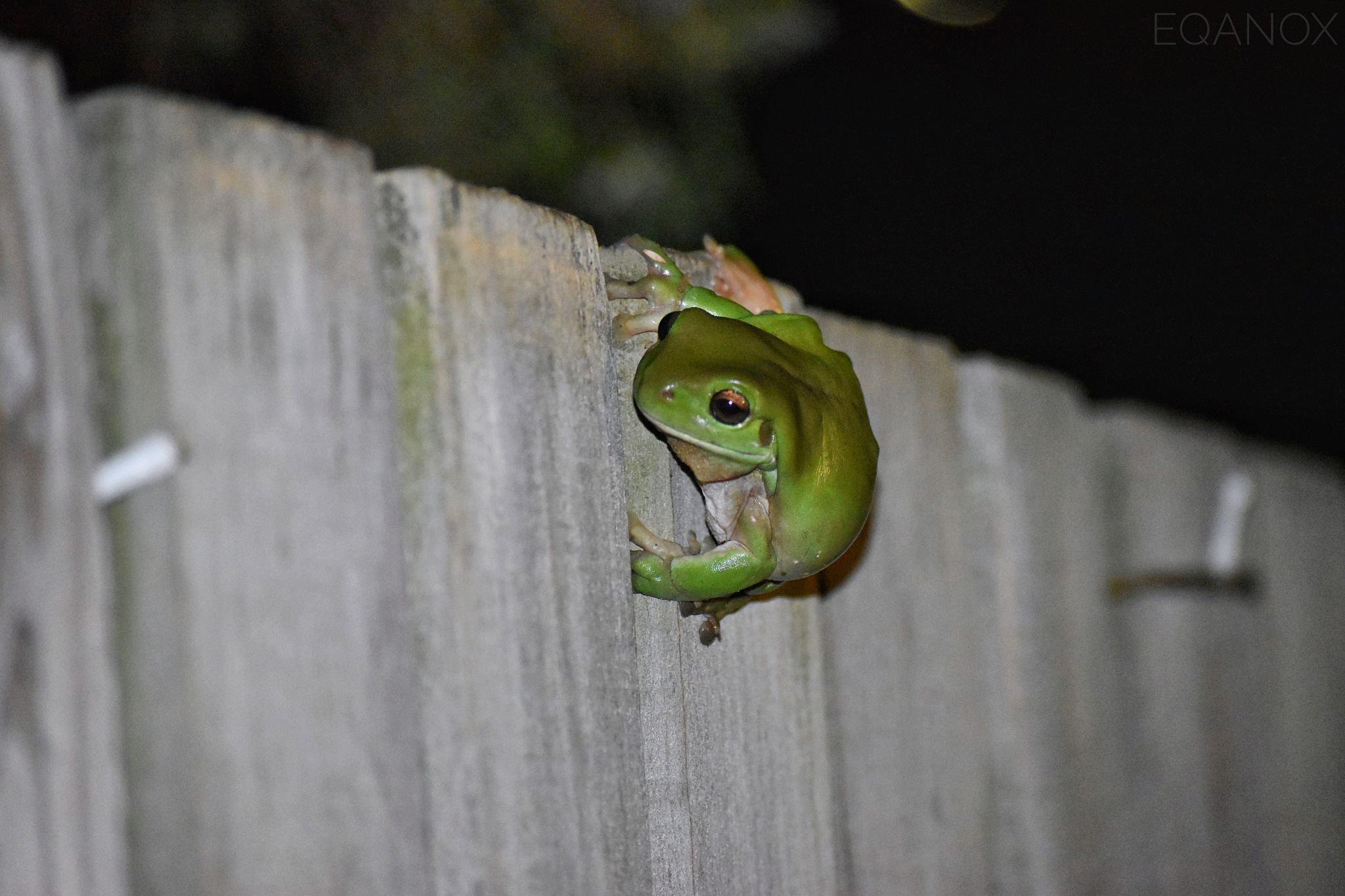 little green friend  by eqanox_photography