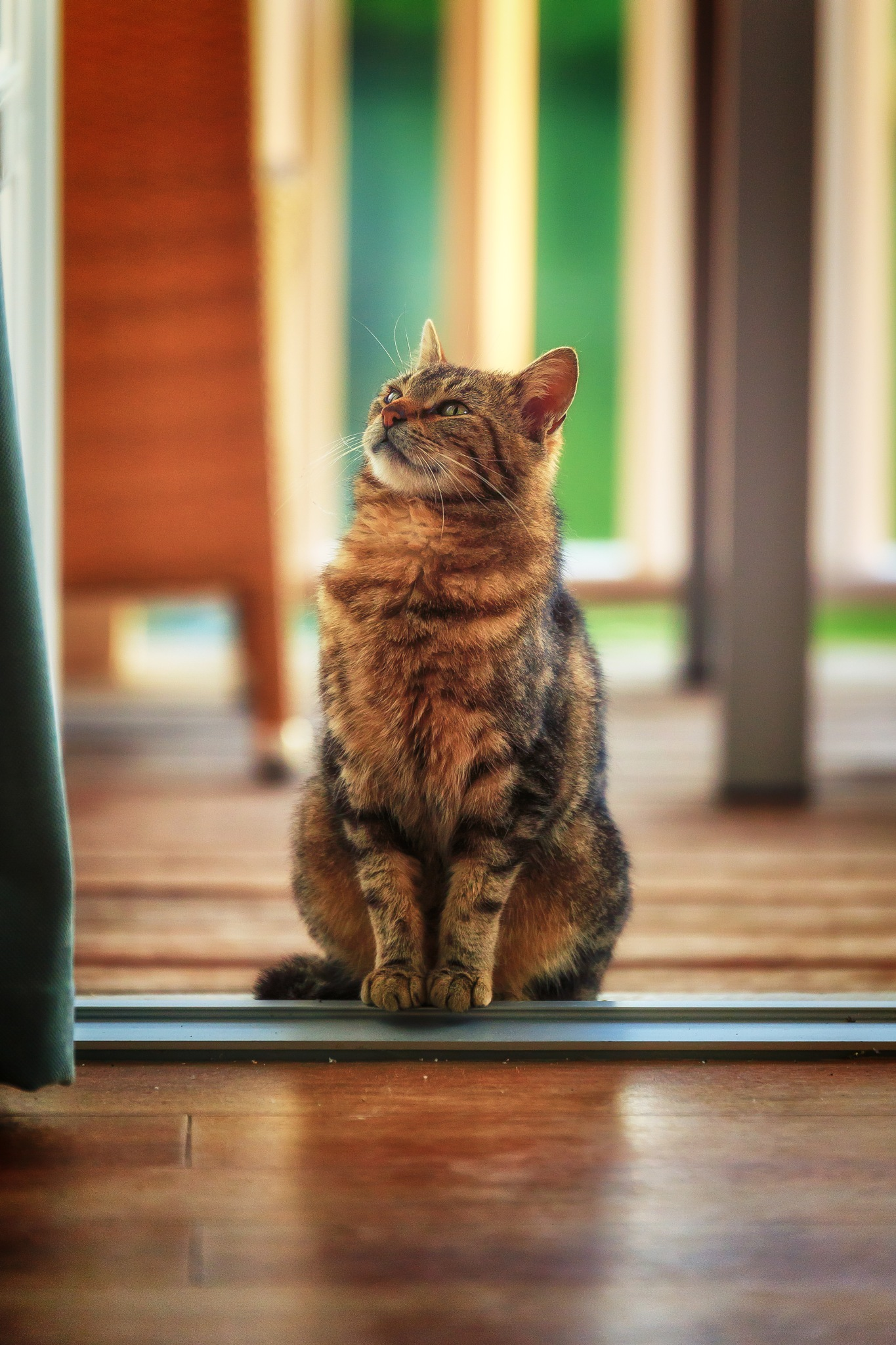 Thinking cat by Chris Butler