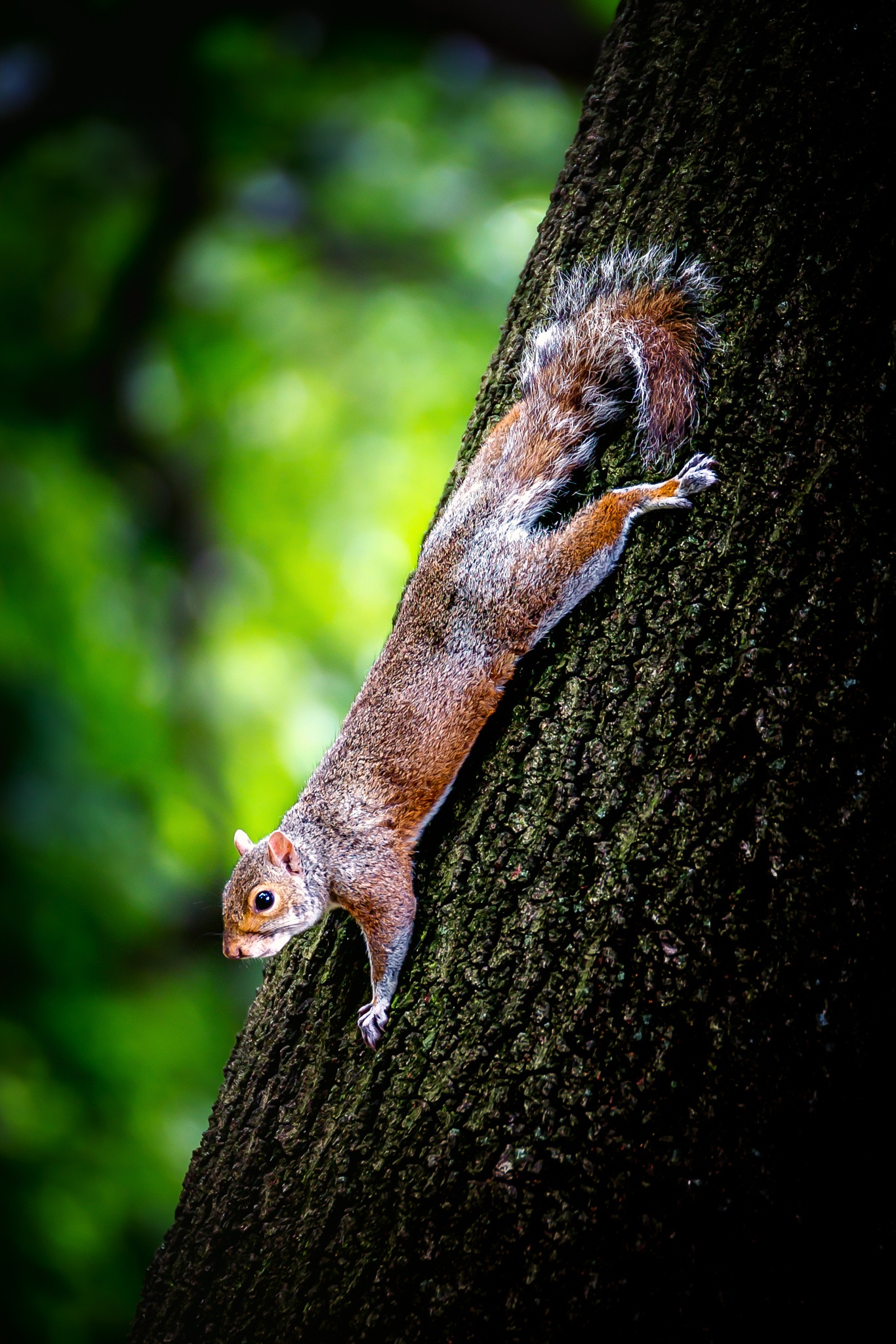 Squirrel in Prospect Park by Chris Butler