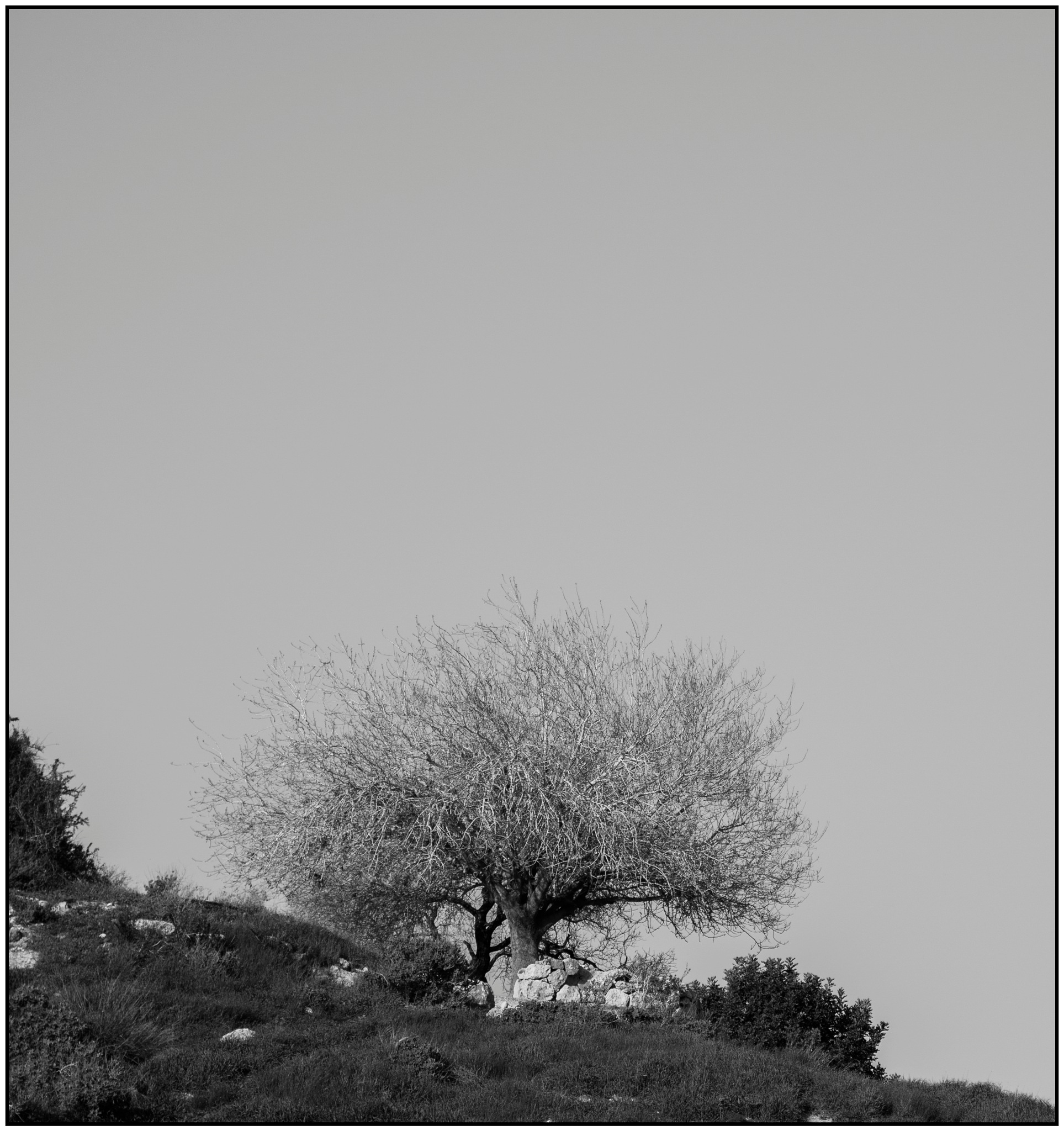 A tree on the hill by benny_b