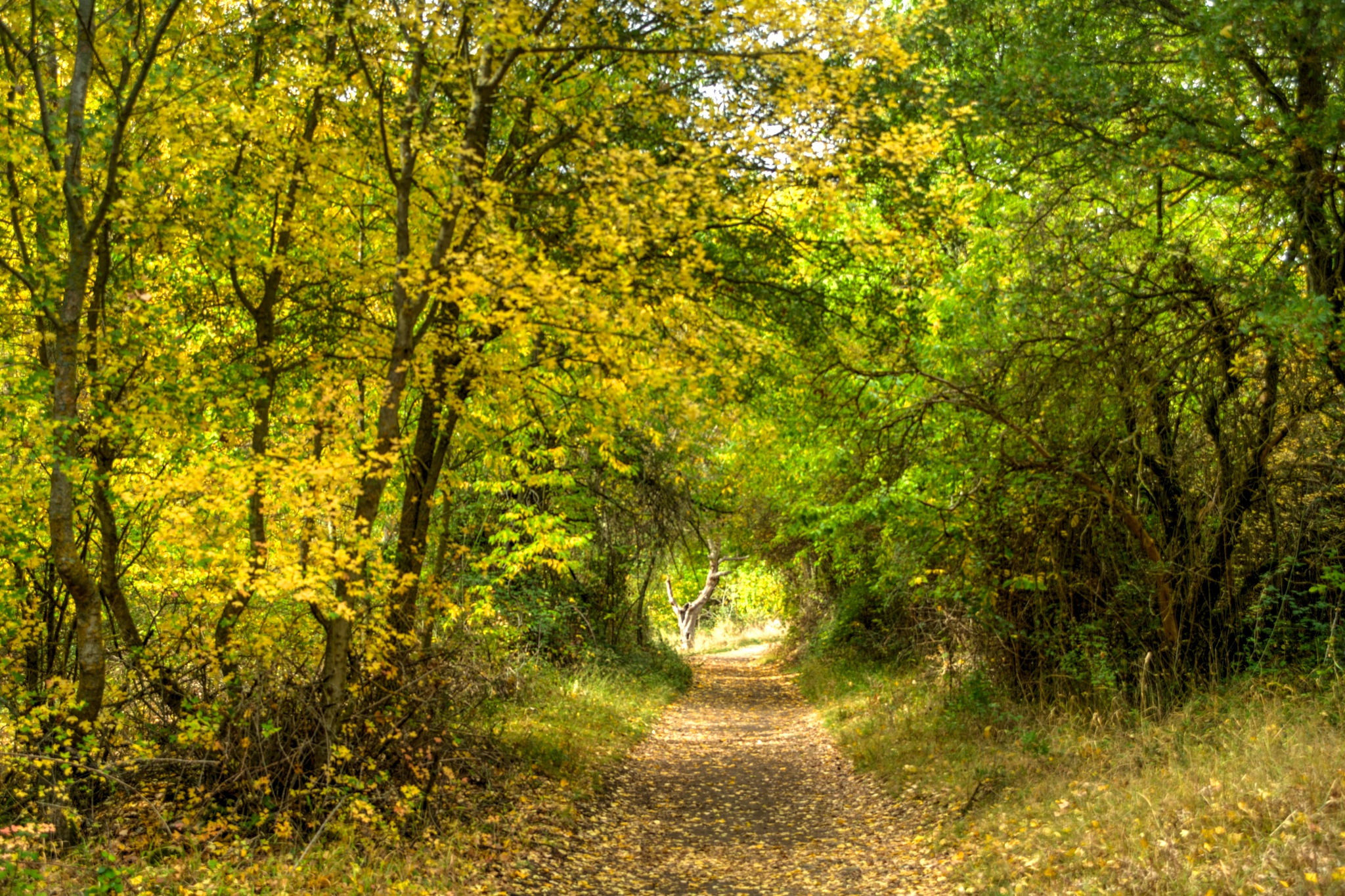 Oyoño 1 by JlmmPhotos