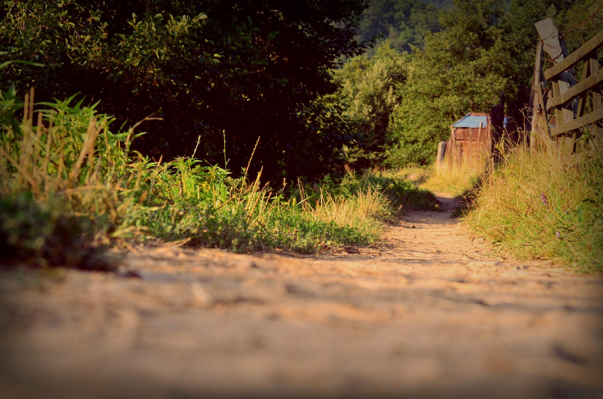 Path by SizredMCMXCIV