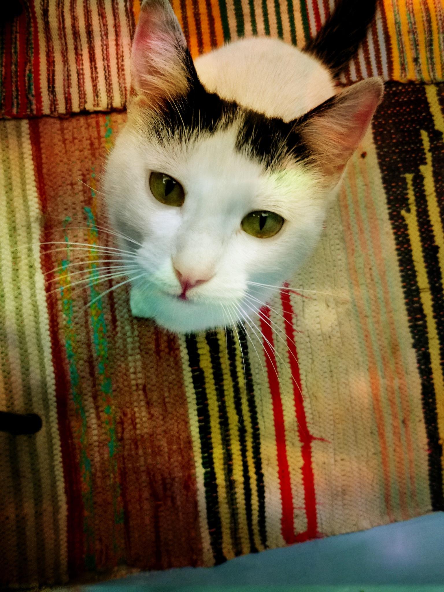 Cat portret by SizredMCMXCIV