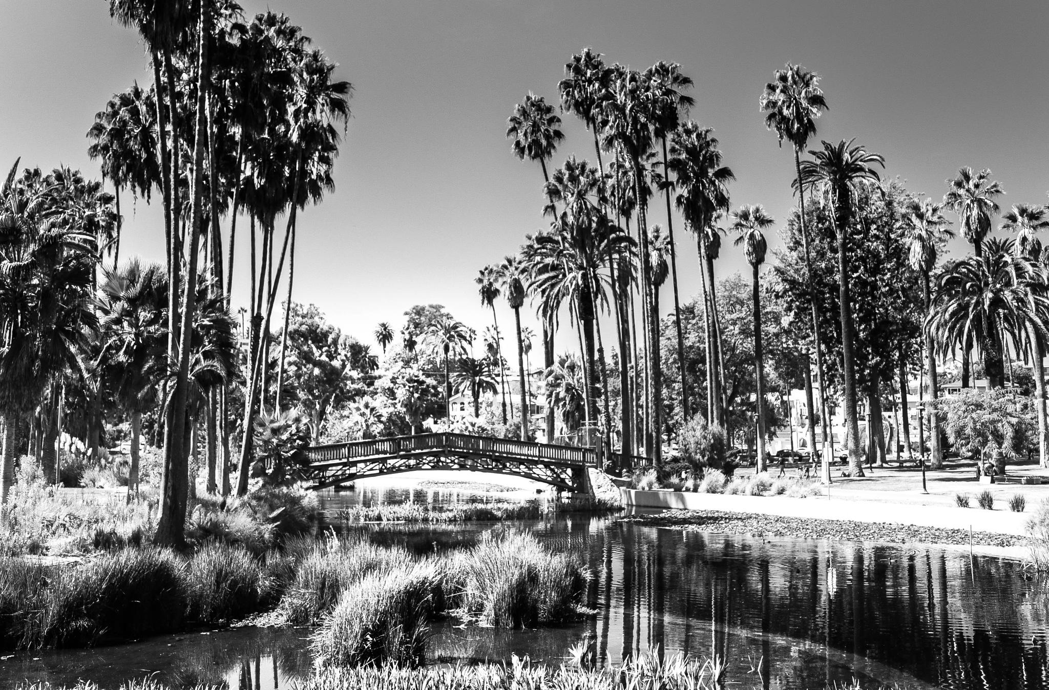 Echo Park by Zane Levitt