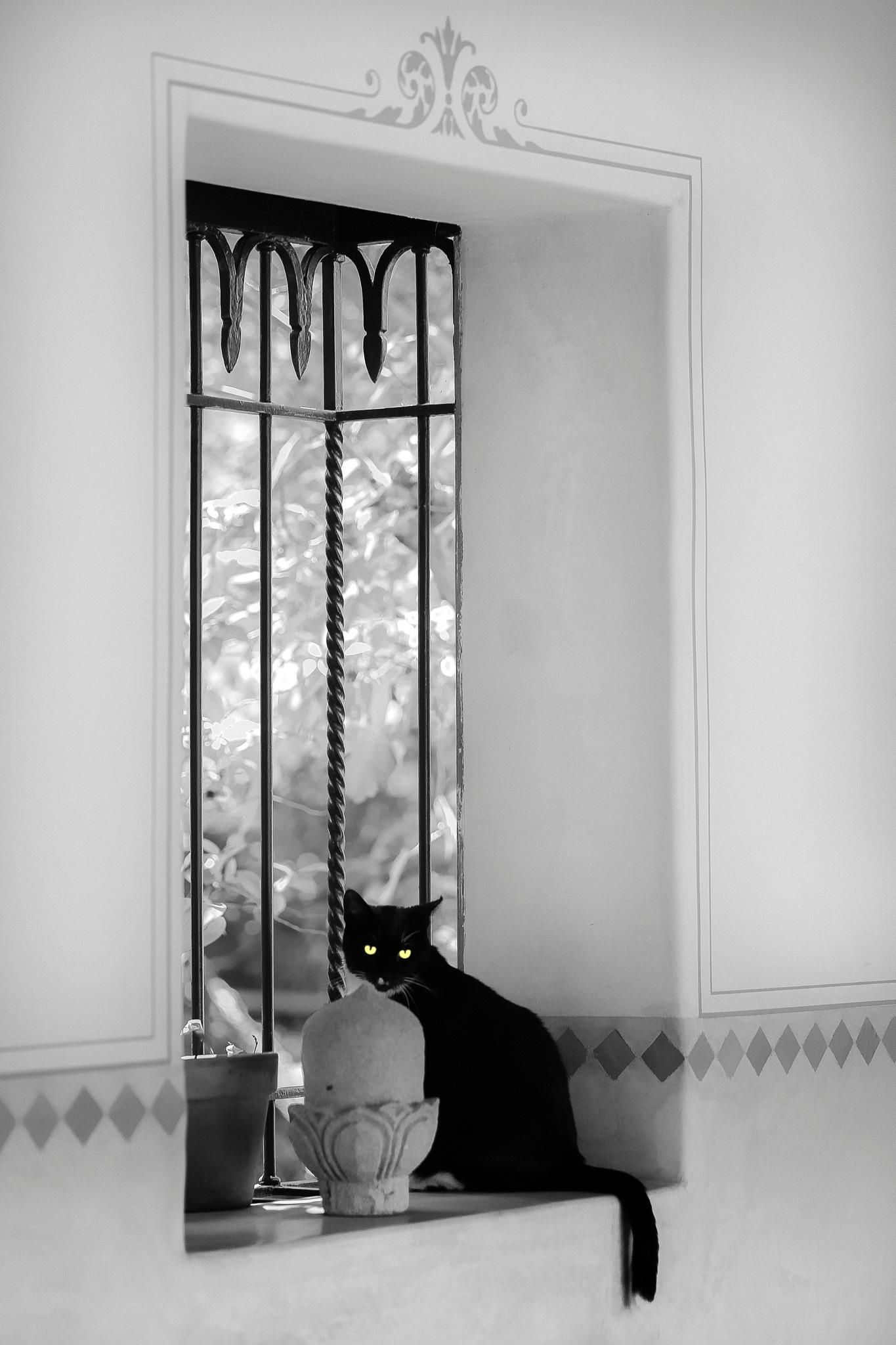 the watcher by Zane Levitt