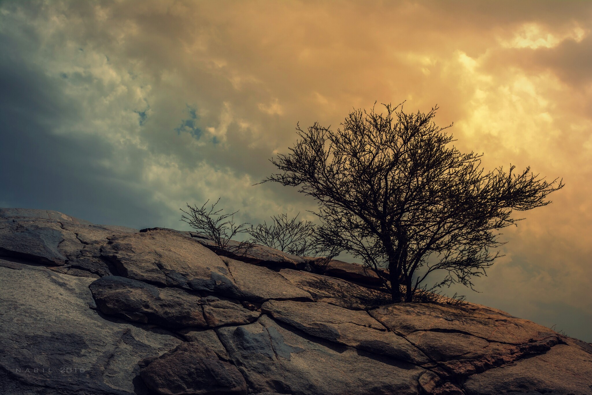 Untitled by Nabil Elsherif