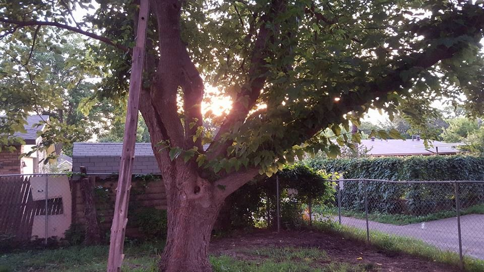 morning sun by Terri Gail Birdwell Jones
