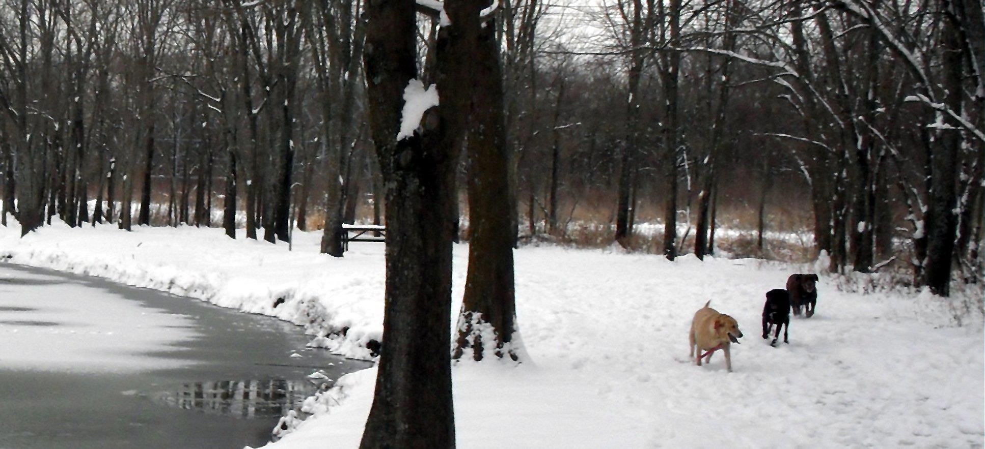 A snowy day in Ablon park with the labs by Terri Gail Birdwell Jones