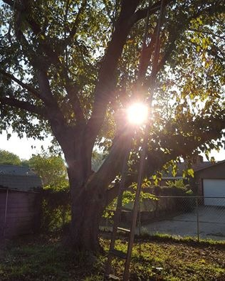 Fall morning in Garland Texas by Terri Gail Birdwell Jones
