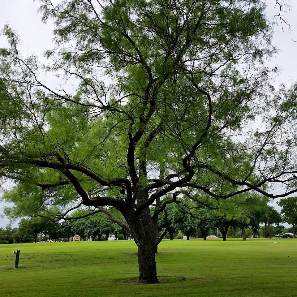 Tree on a rainy day by Terri Gail Birdwell Jones