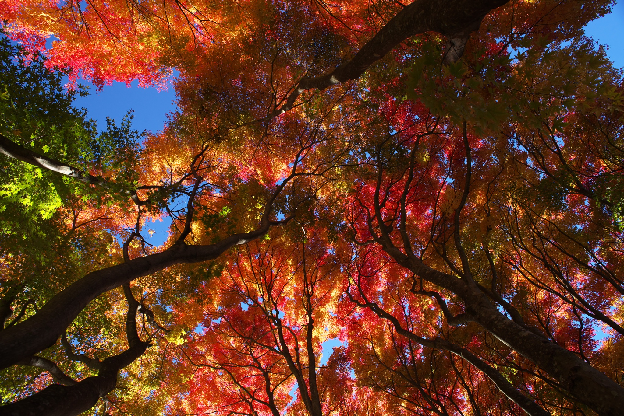 Autumn Colors by Masashi Itoh