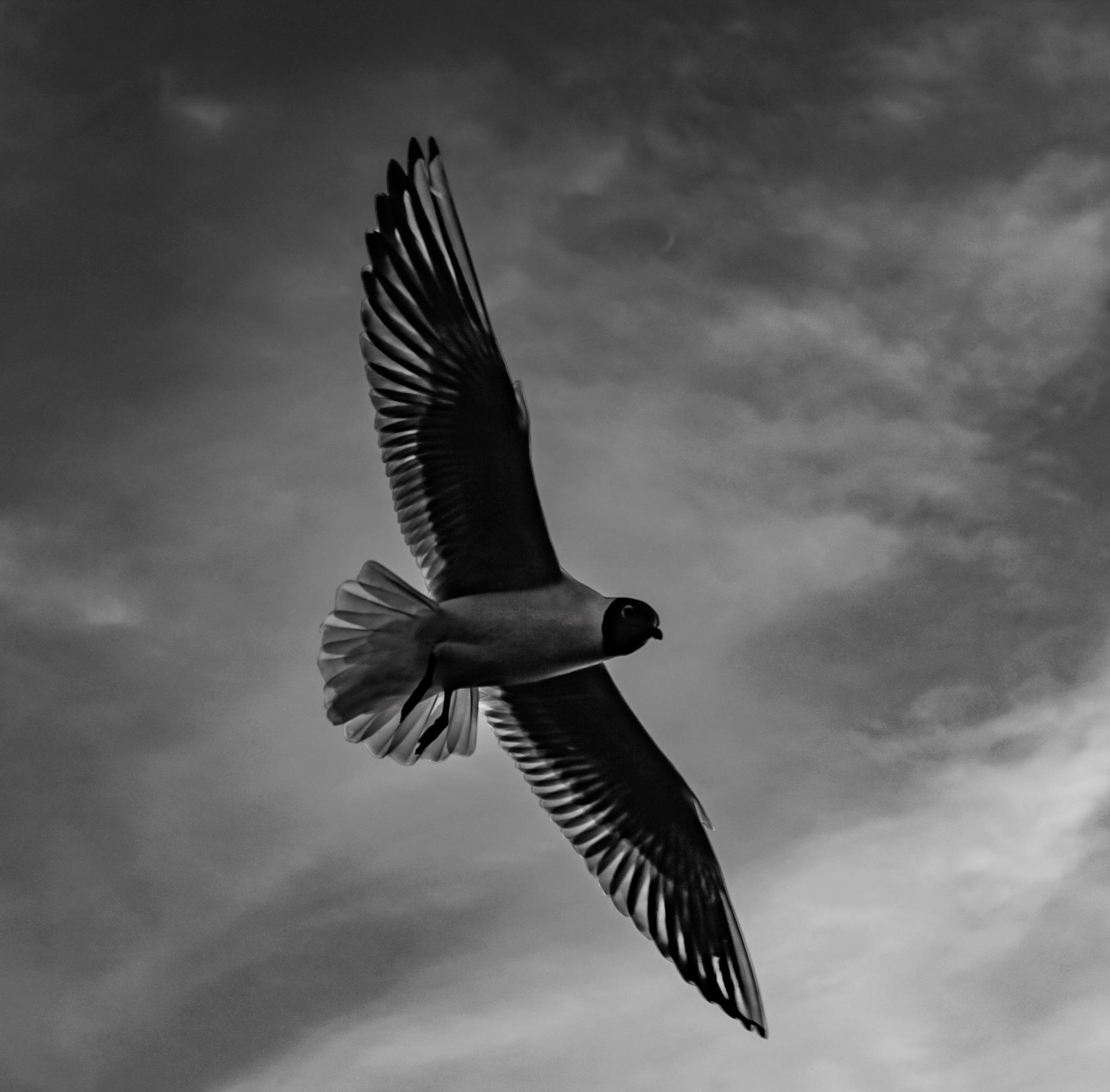 Alone in sky by juglinieksx