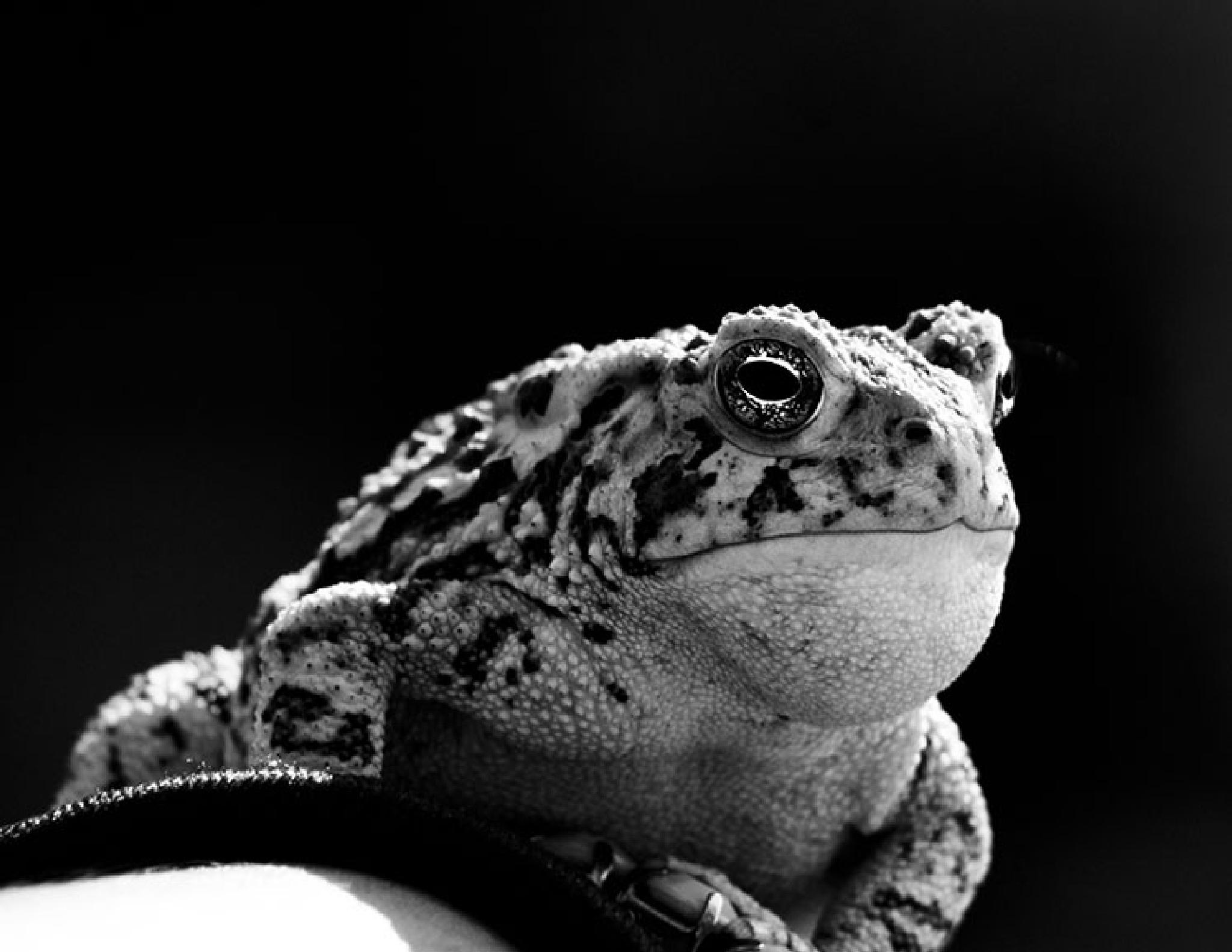 Mr. Frog by Ana Perez