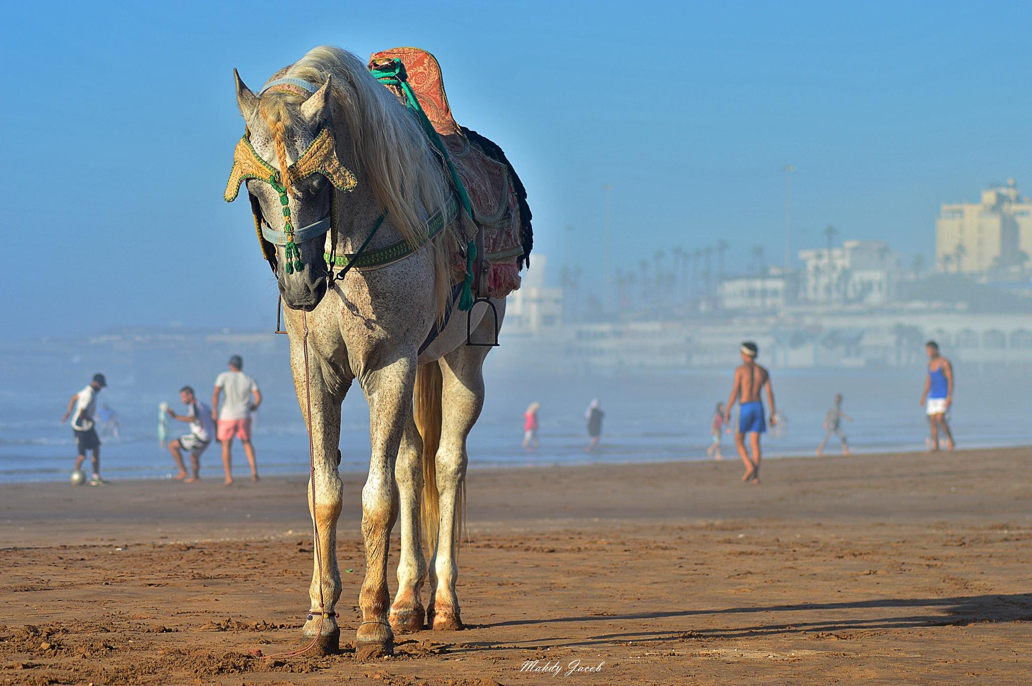 sad horse  by mahdyjacob