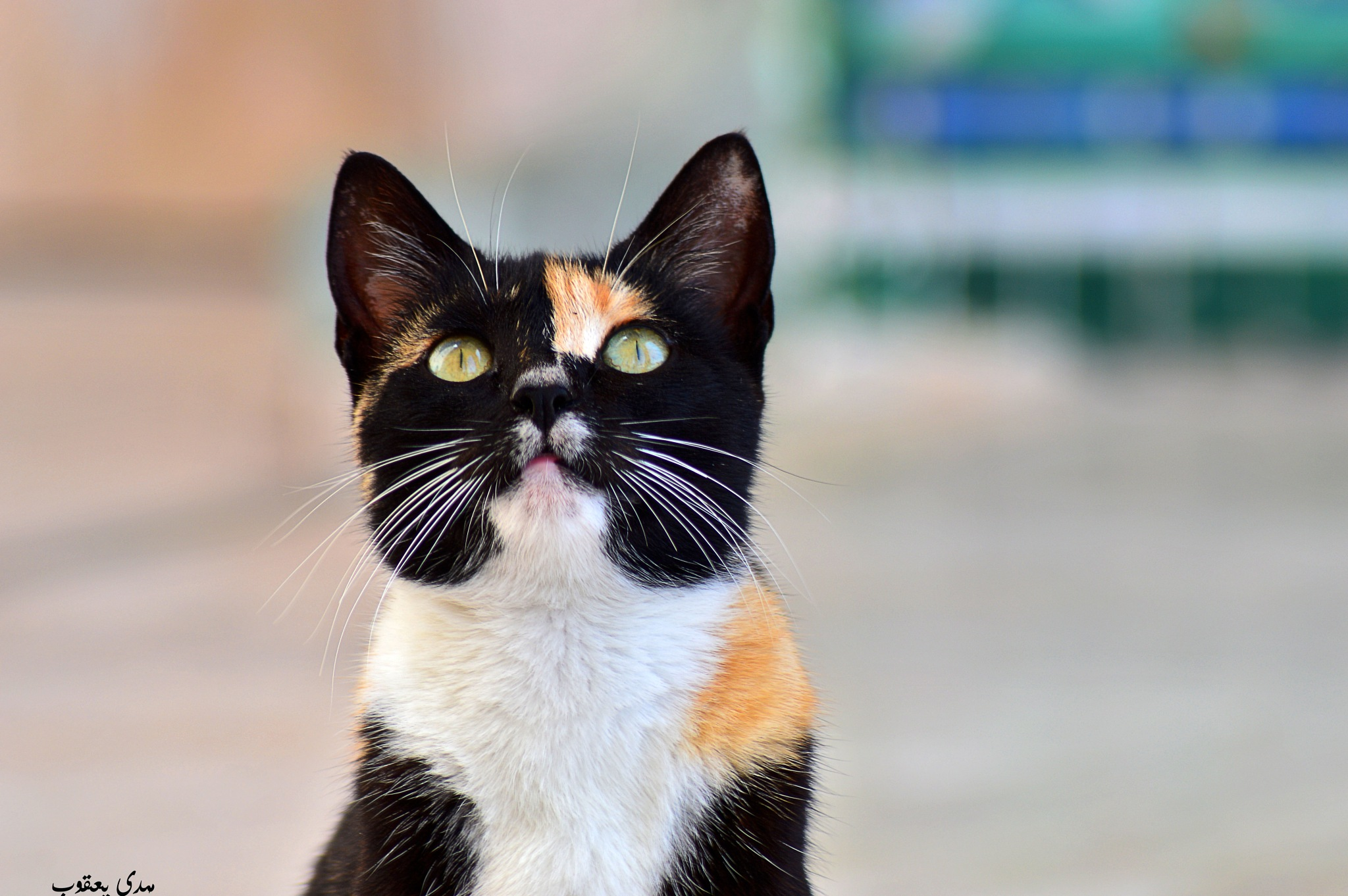 cat by mahdyjacob
