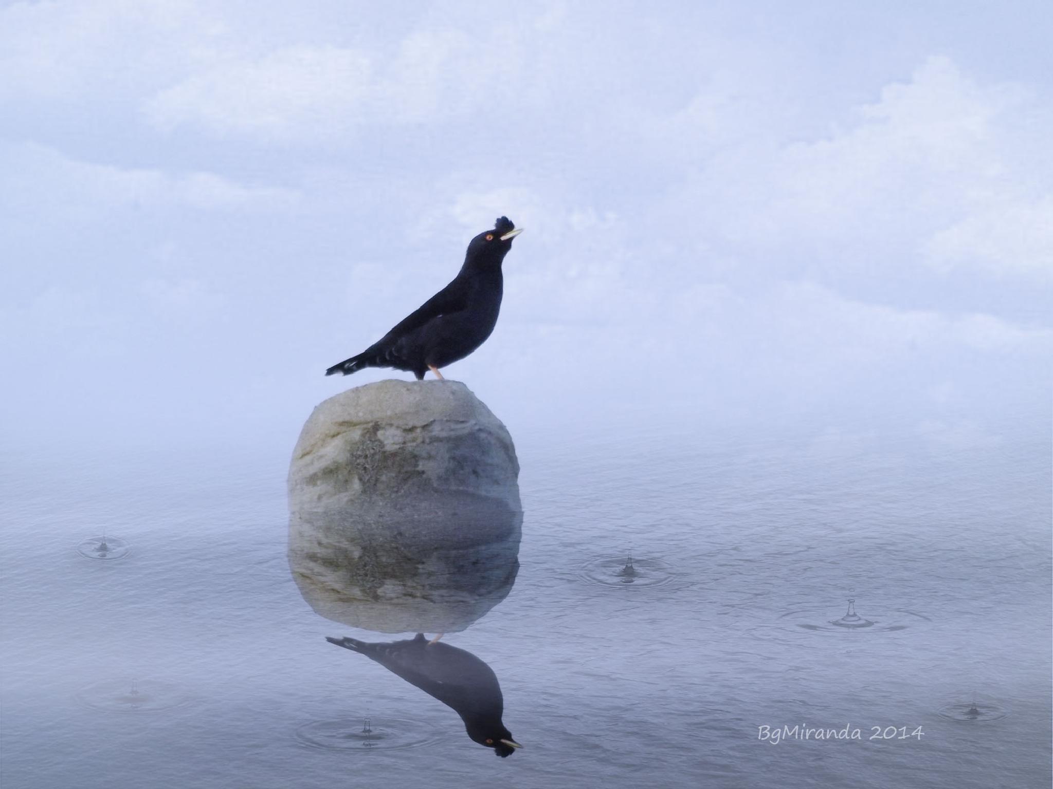 Starling by Bernard Miranda