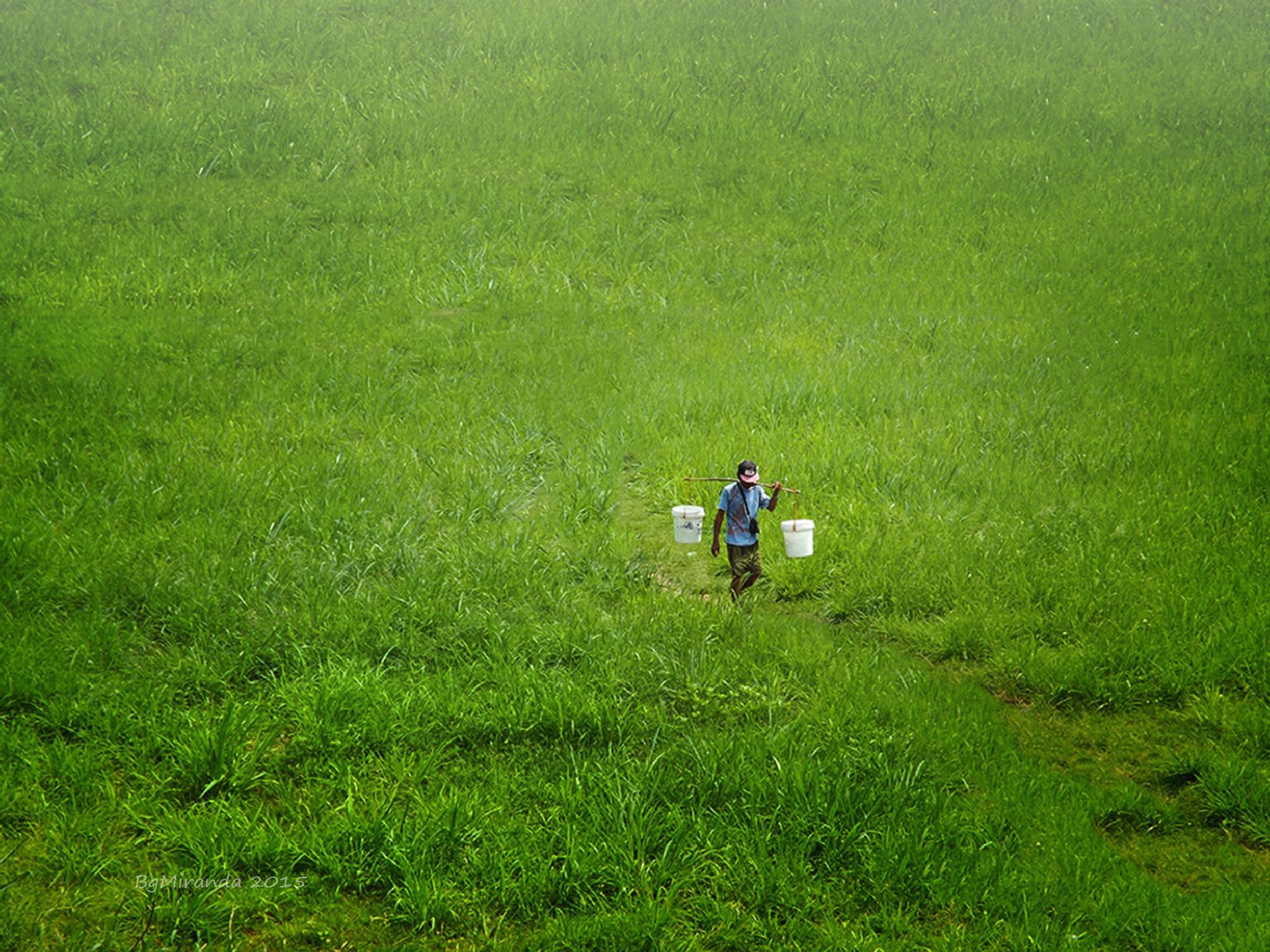 Green green grass of Home by Bernard Miranda