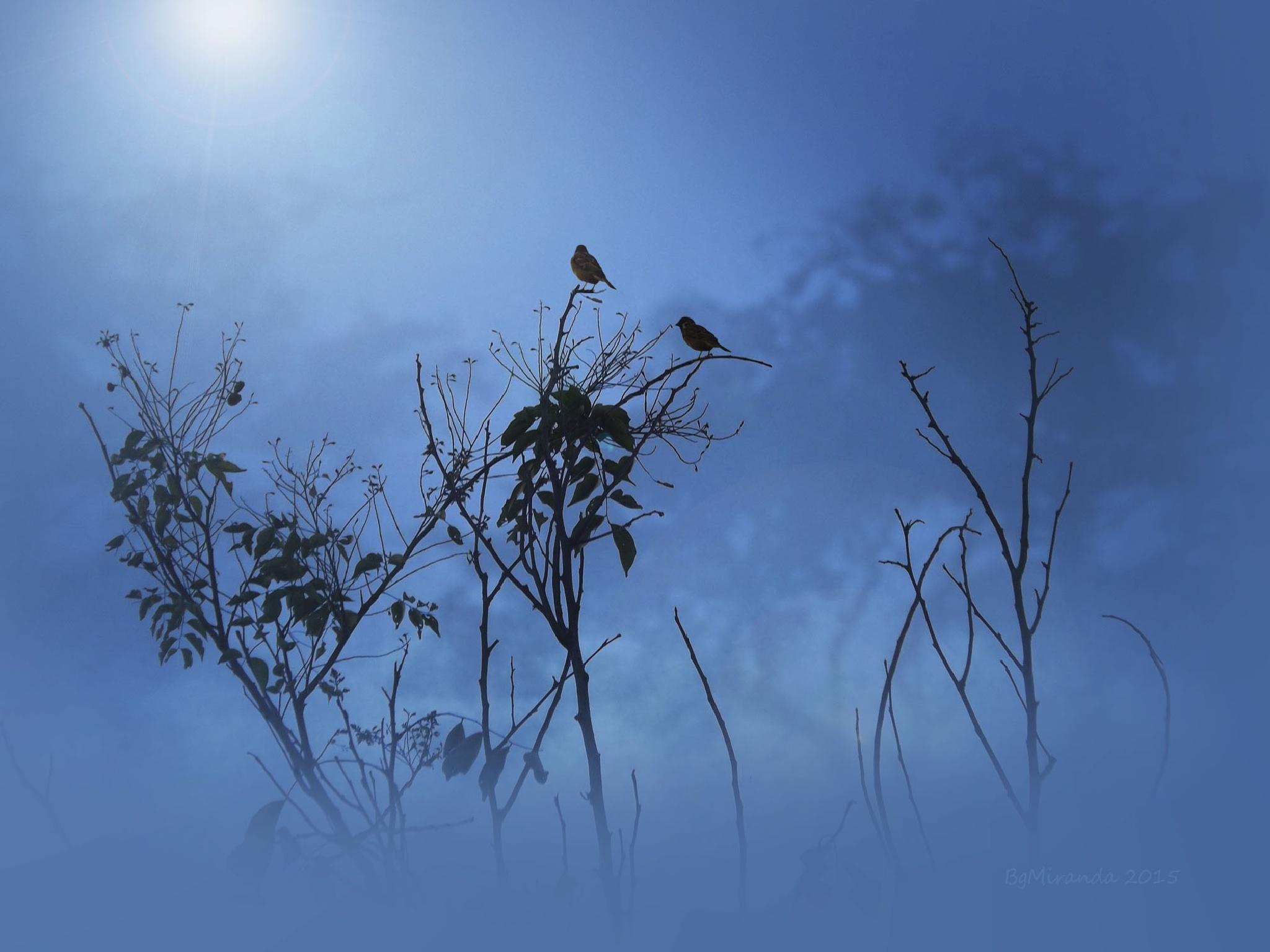 Sparrows in the Morning Blues by Bernard Miranda