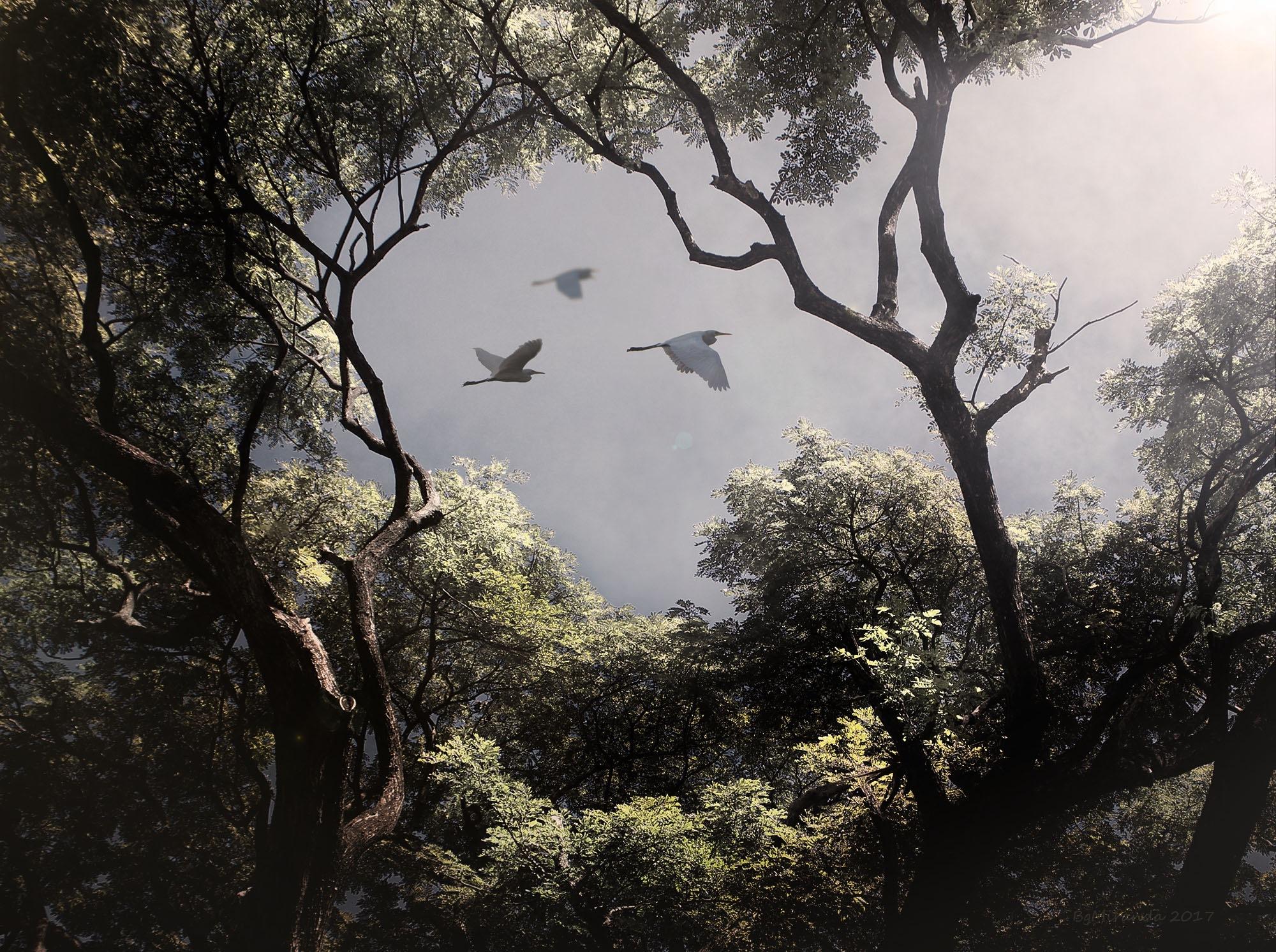 Three Egrets by Bernard Miranda