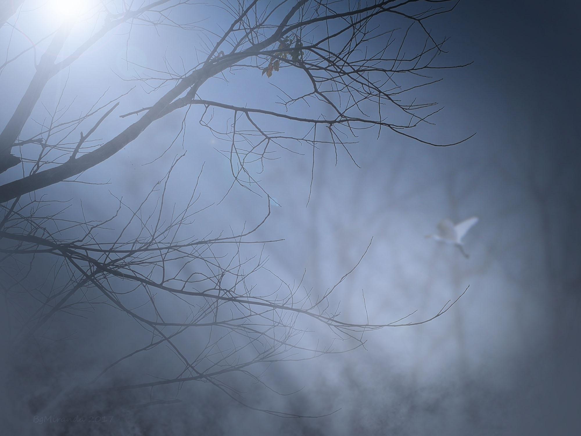 Looking for Nest by Bernard Miranda