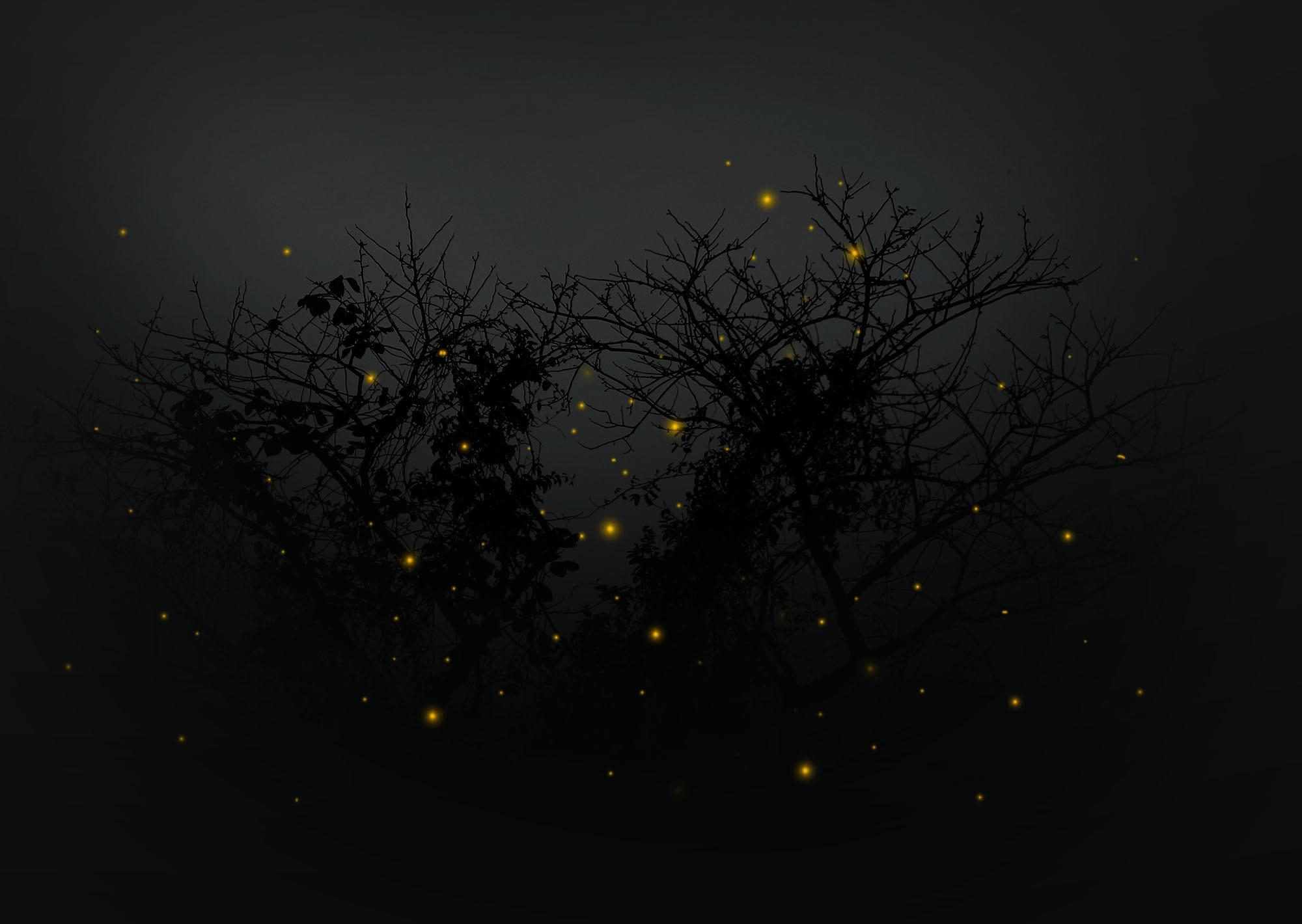 Fireflies by Bernard Miranda