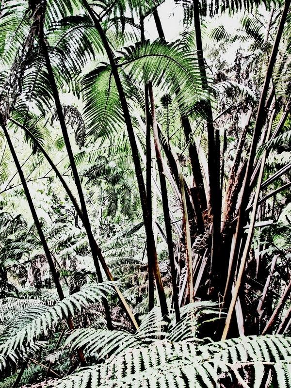 Ferns by Donald Bruce Edward Wilson