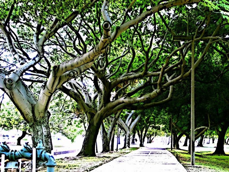 Hawaiian Walkway by Donald Bruce Edward Wilson