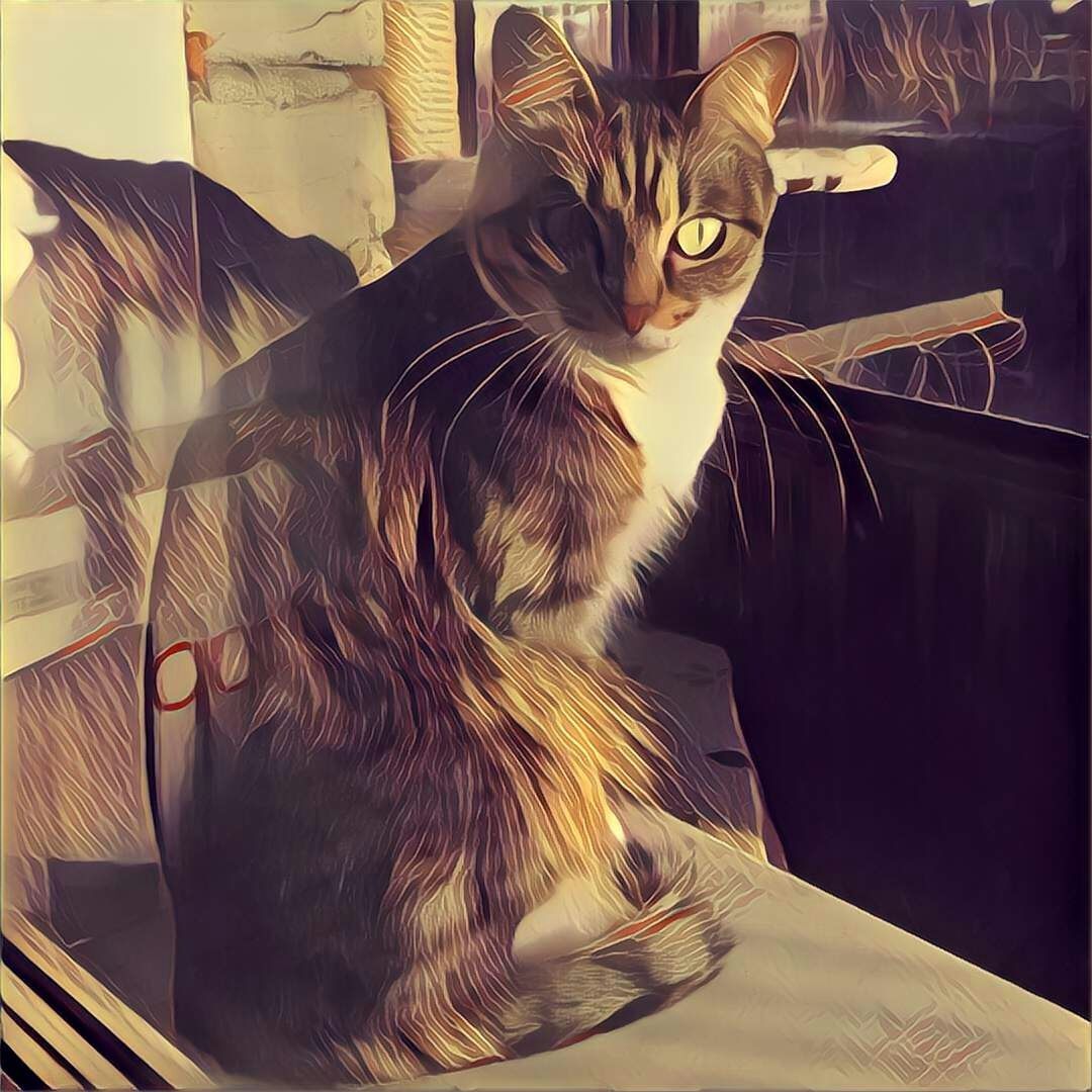 My cat behind the window. by Lightspear