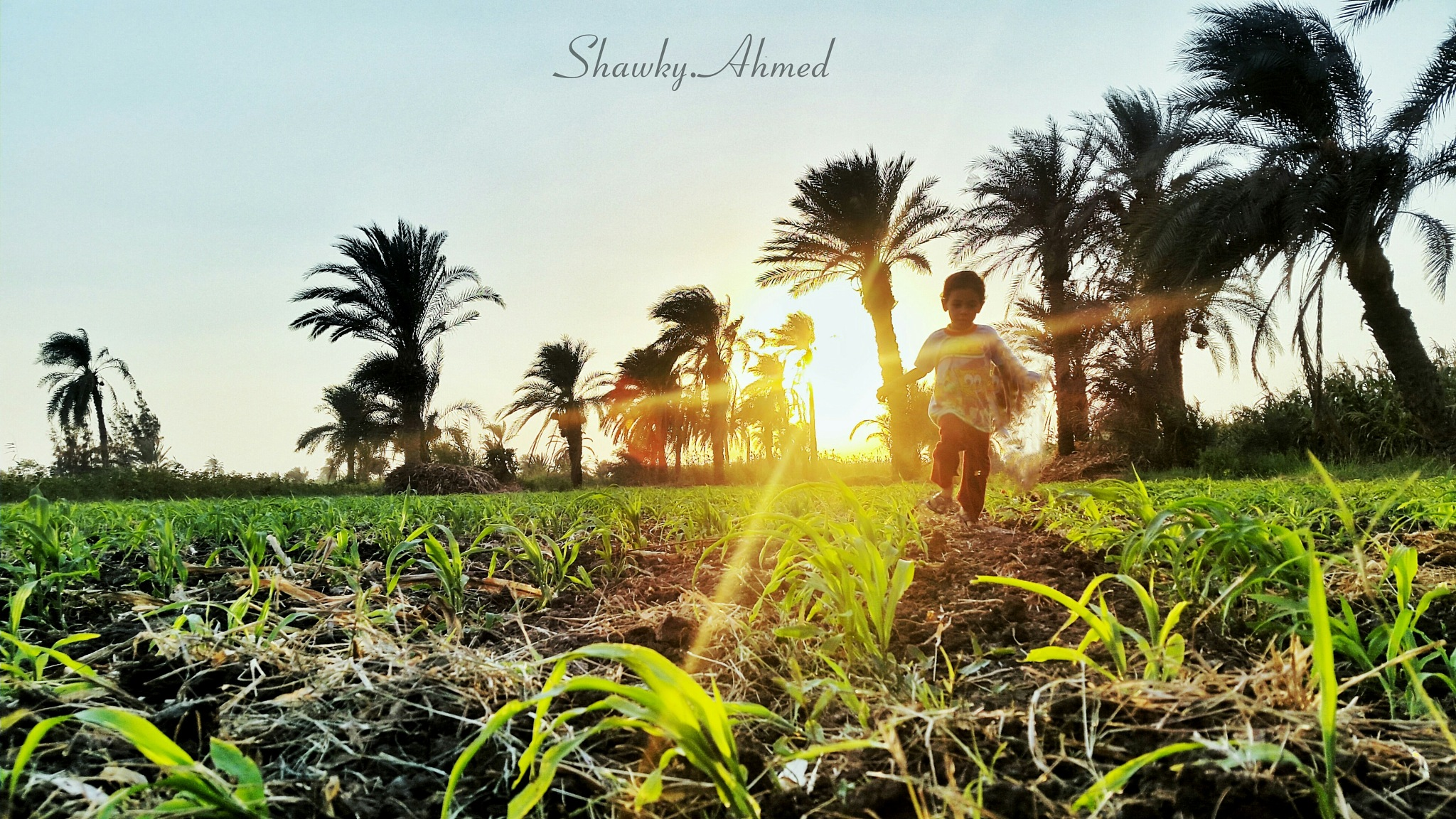 Untitled by Shawky Ahmed