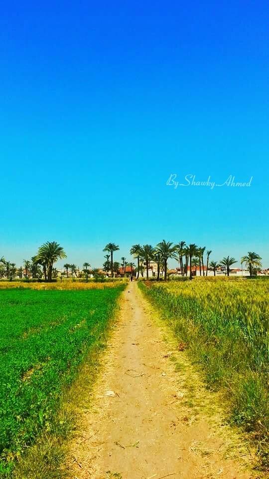 الطريق ال المنزل by Shawky Ahmed
