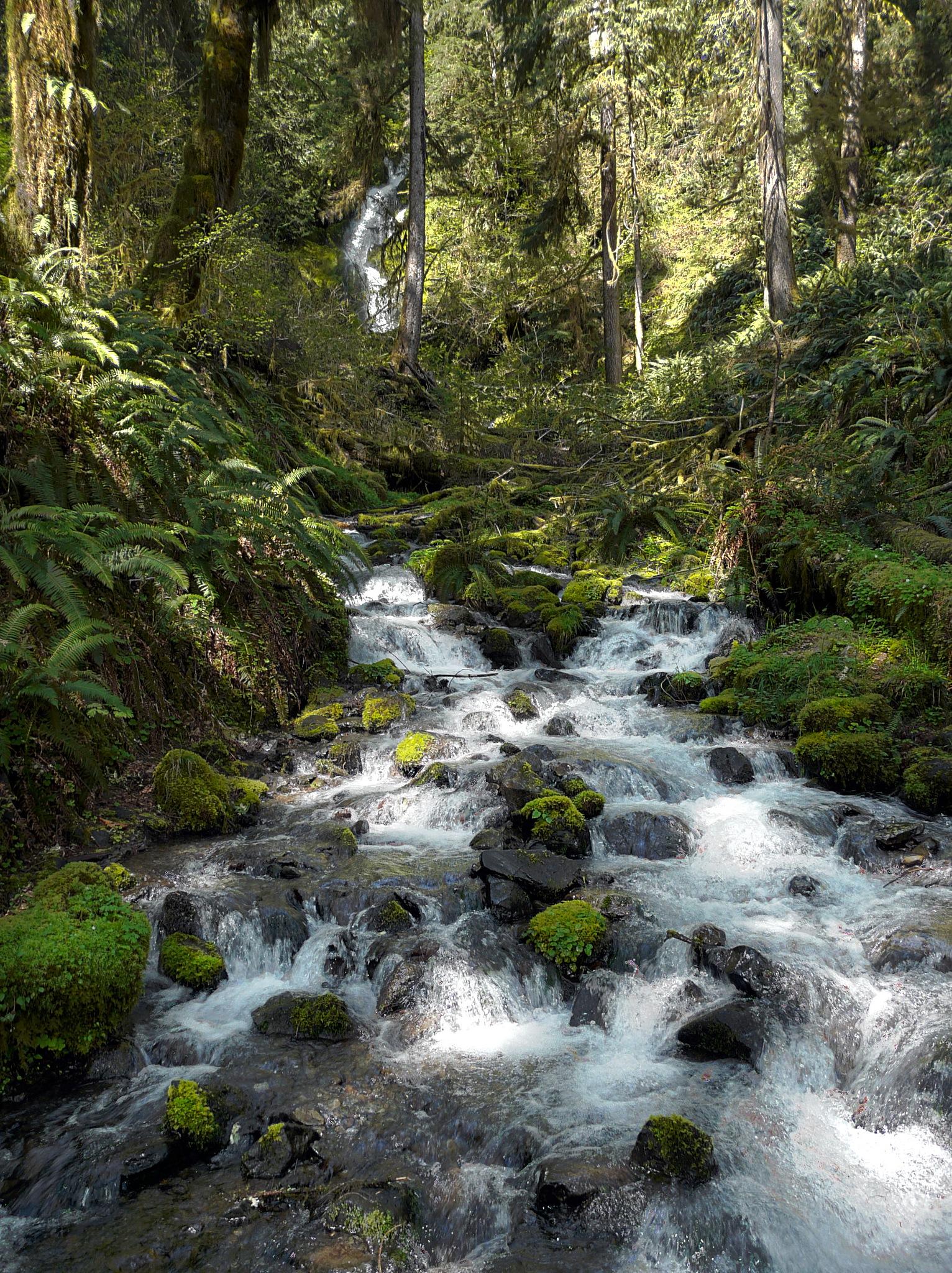 Hoh Rain Forest by Bret Little
