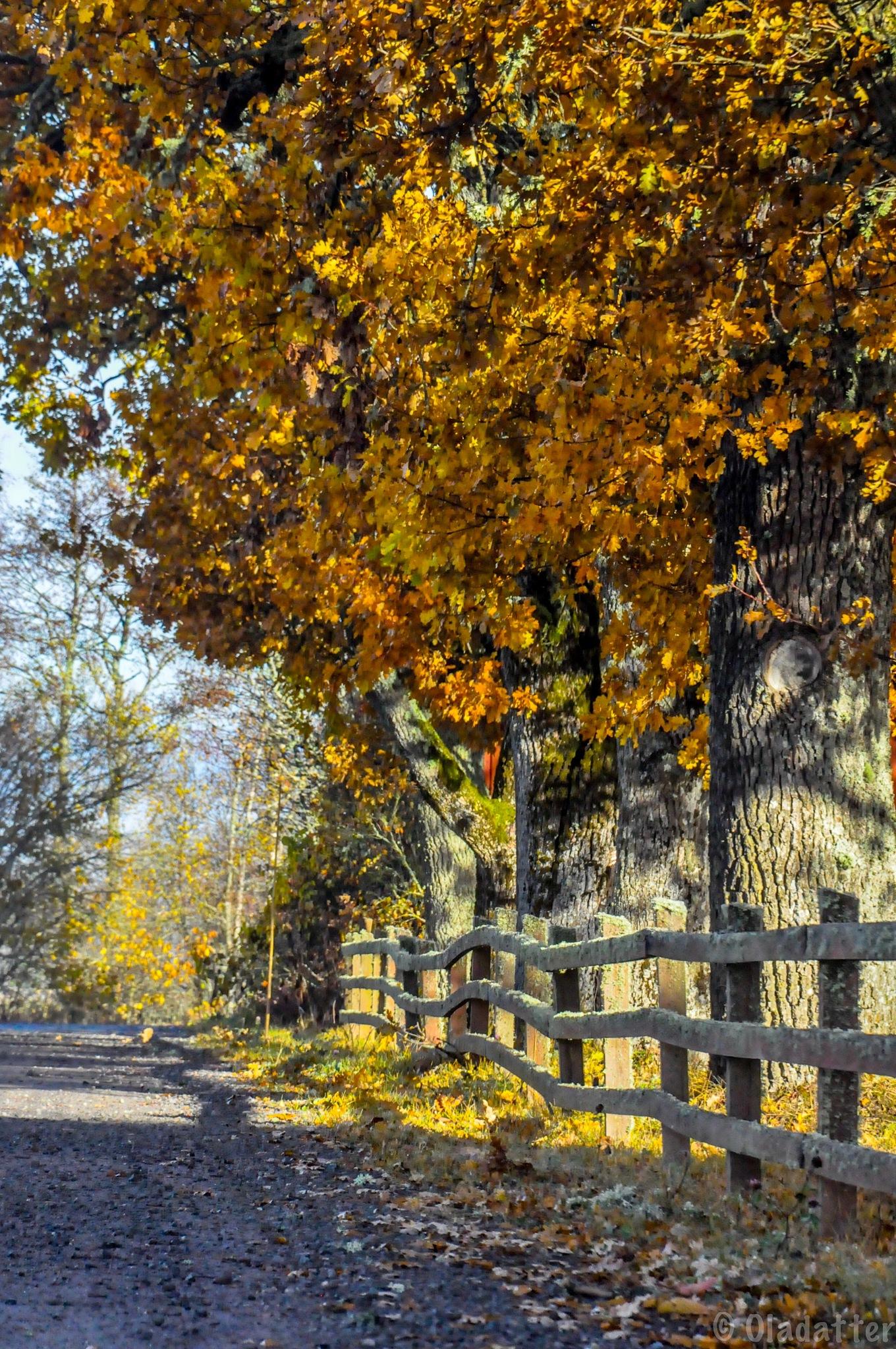 Just before the leaves fall by Kristin Oladatter