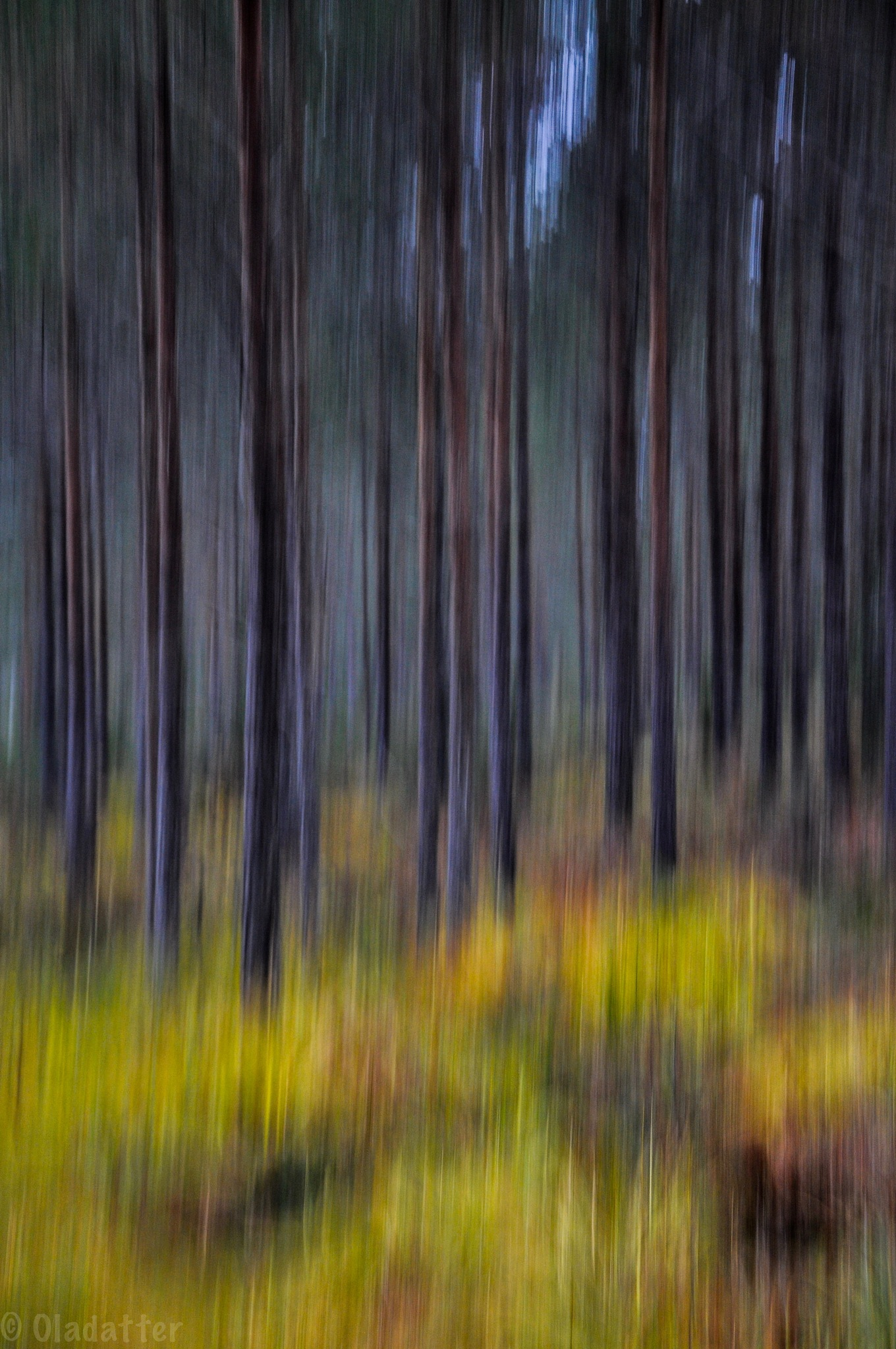 Autumn forest by Kristin Oladatter