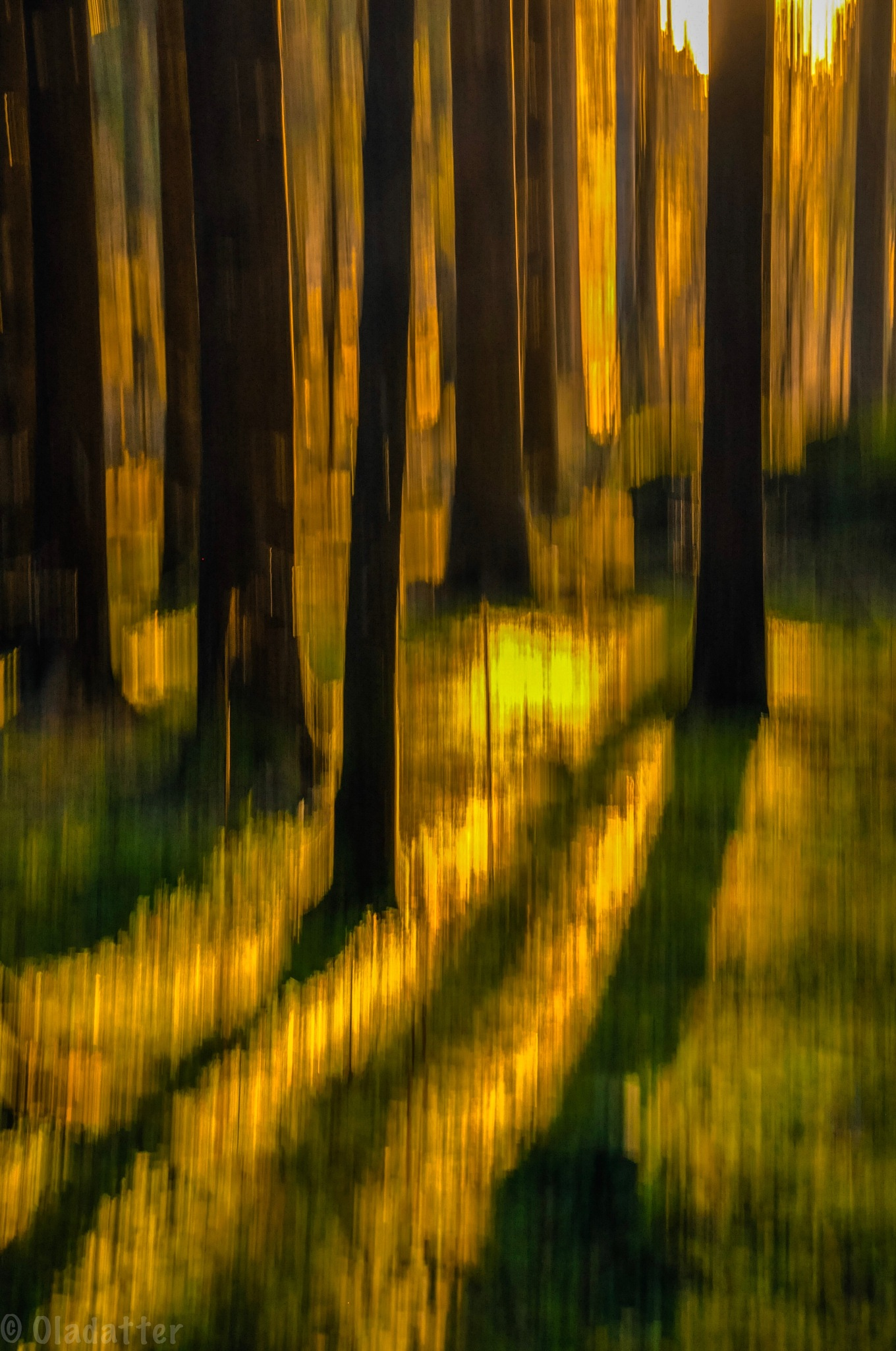 Ray of light in the Autumn forest by Kristin Oladatter