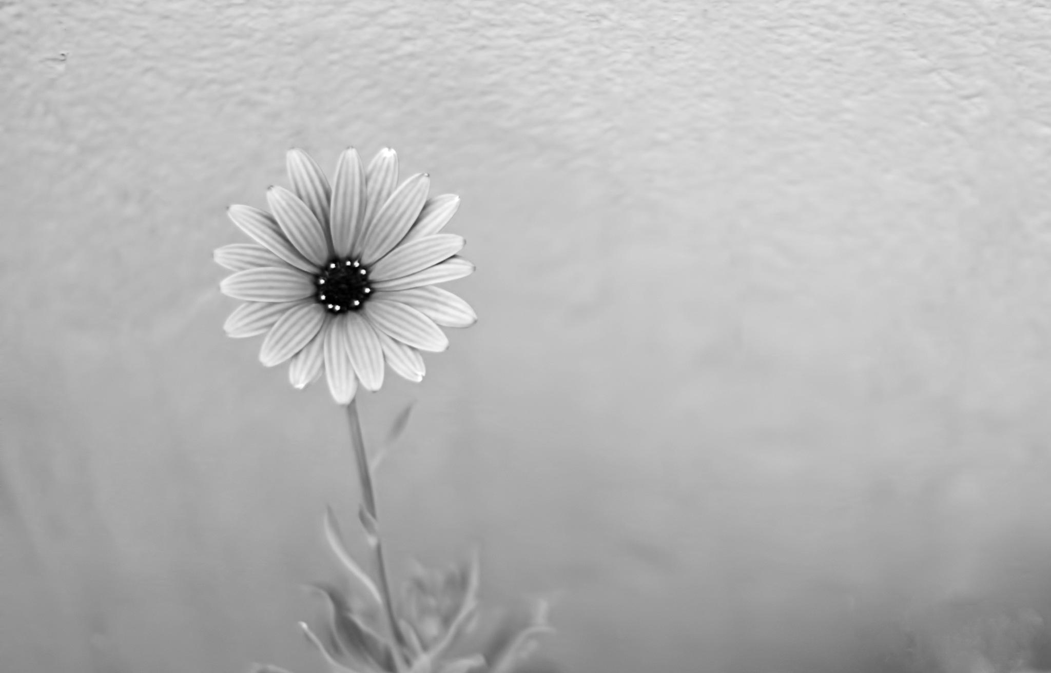 Untitled by Aziza Za