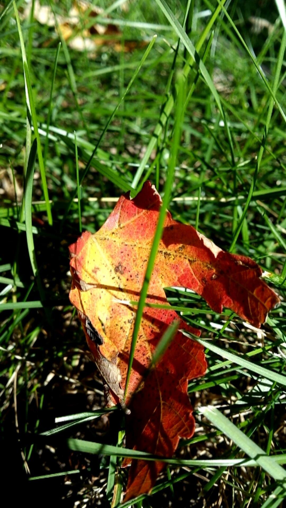 leaf by Allexziss Carpenter