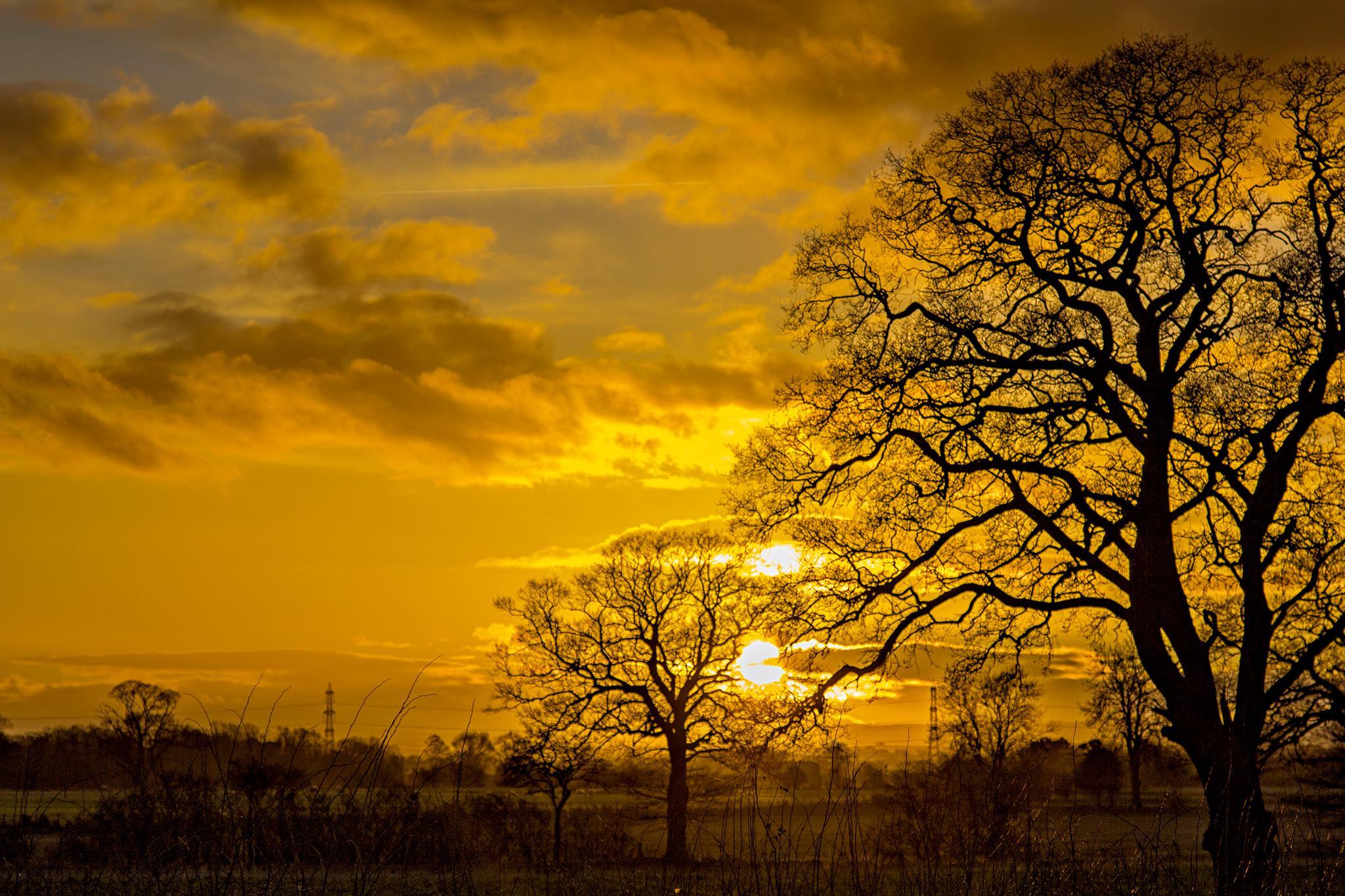 Yellow Sunset by Tony Shaw