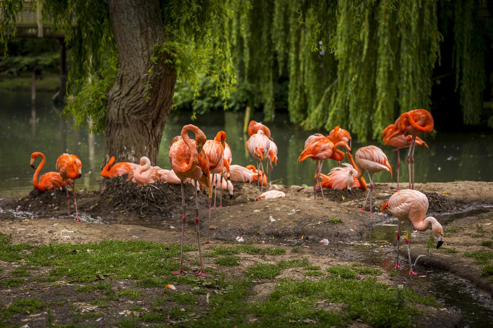 Flamingo's by Tony Shaw