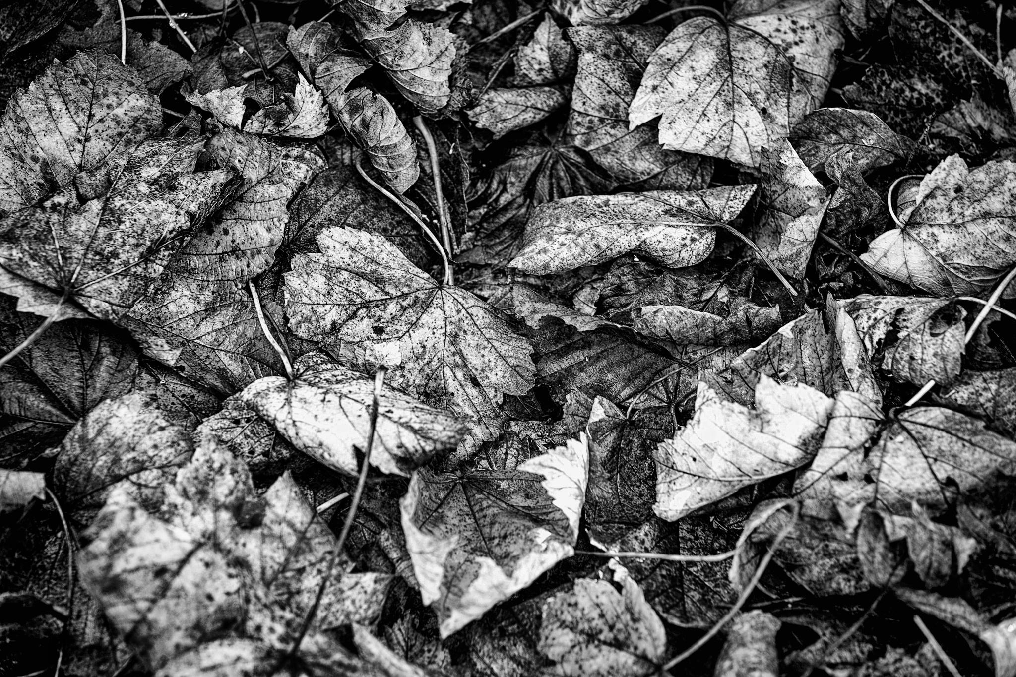 Winter Leaf by Tony Shaw