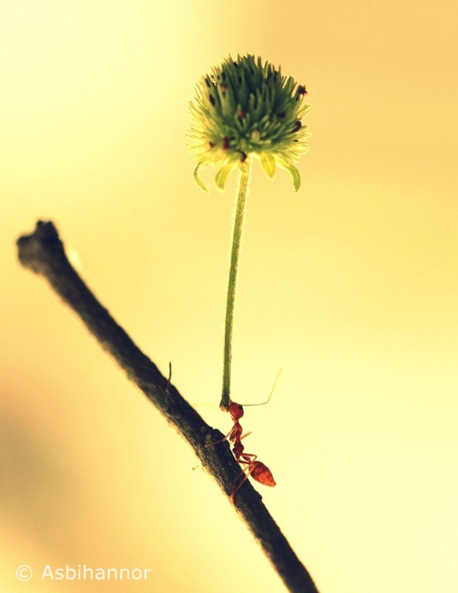 Power of the ant by Asbihannor