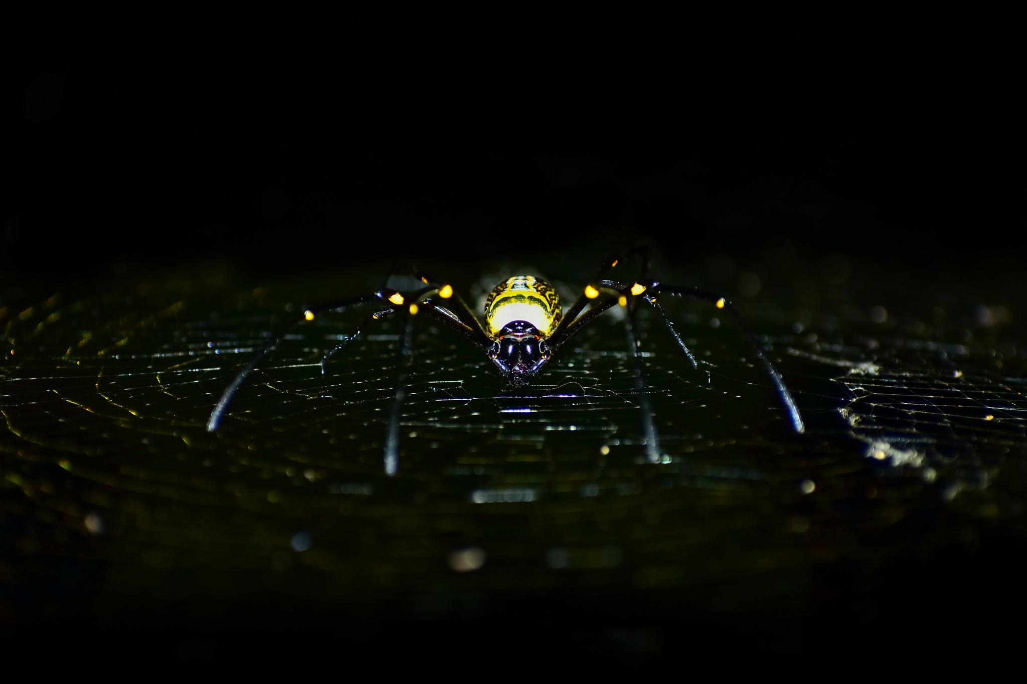 flash spider by Rahul Lohar