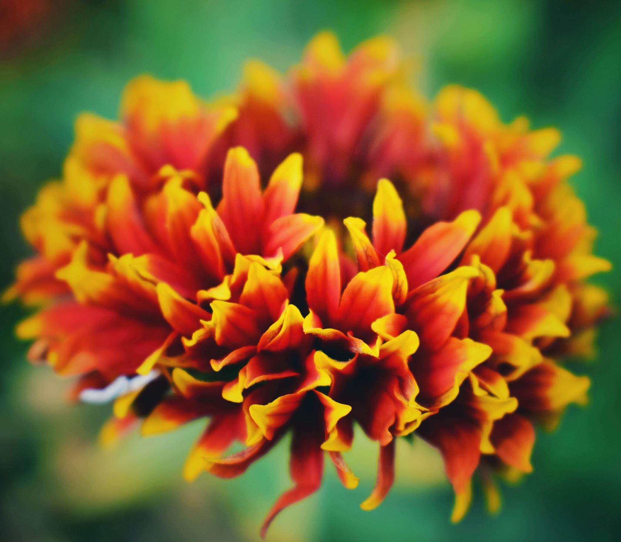 depth of flower by Rahul Lohar